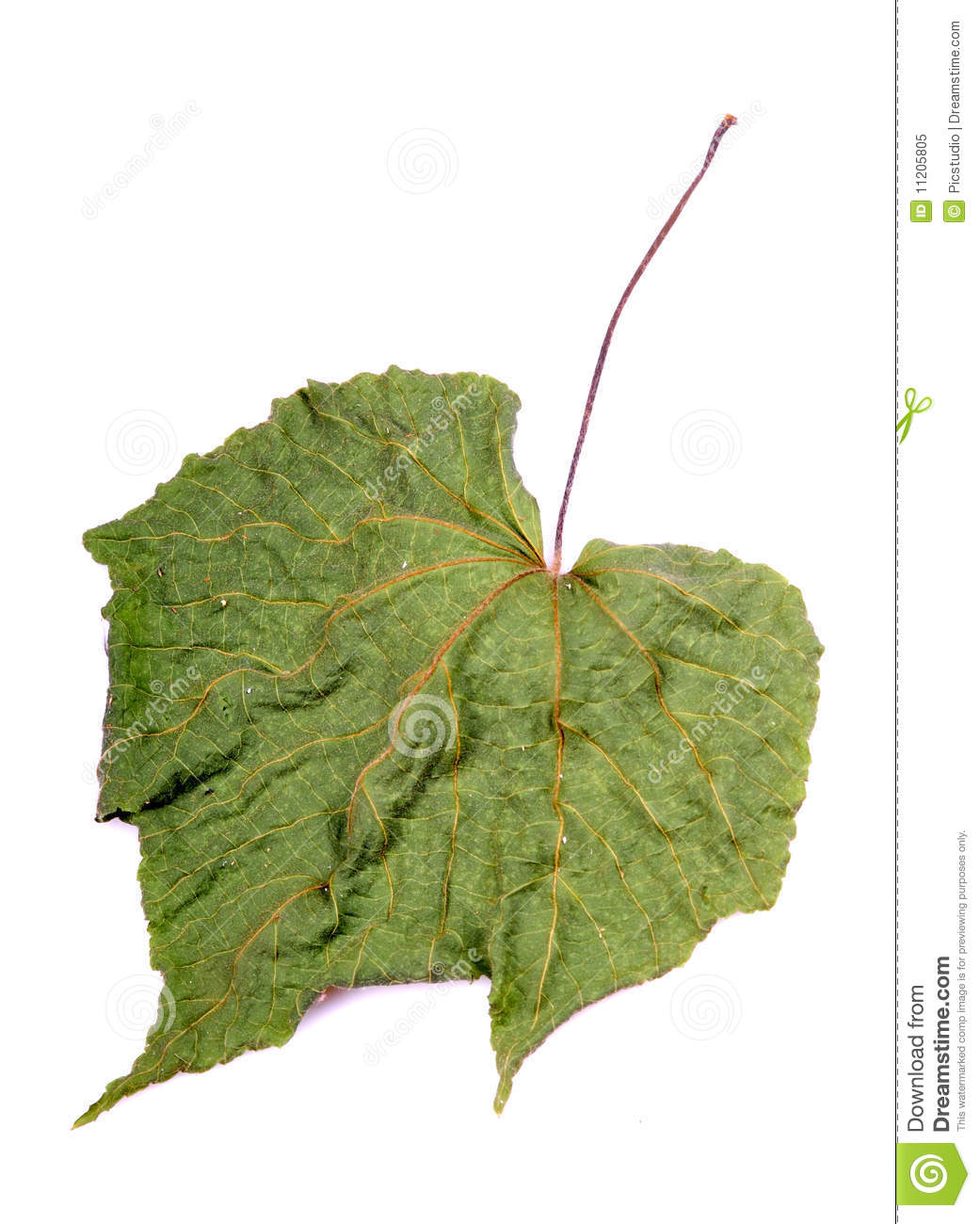 Dry leaf diagram stock image image of closeup nature 11205805 dry leaf diagram pooptronica Choice Image