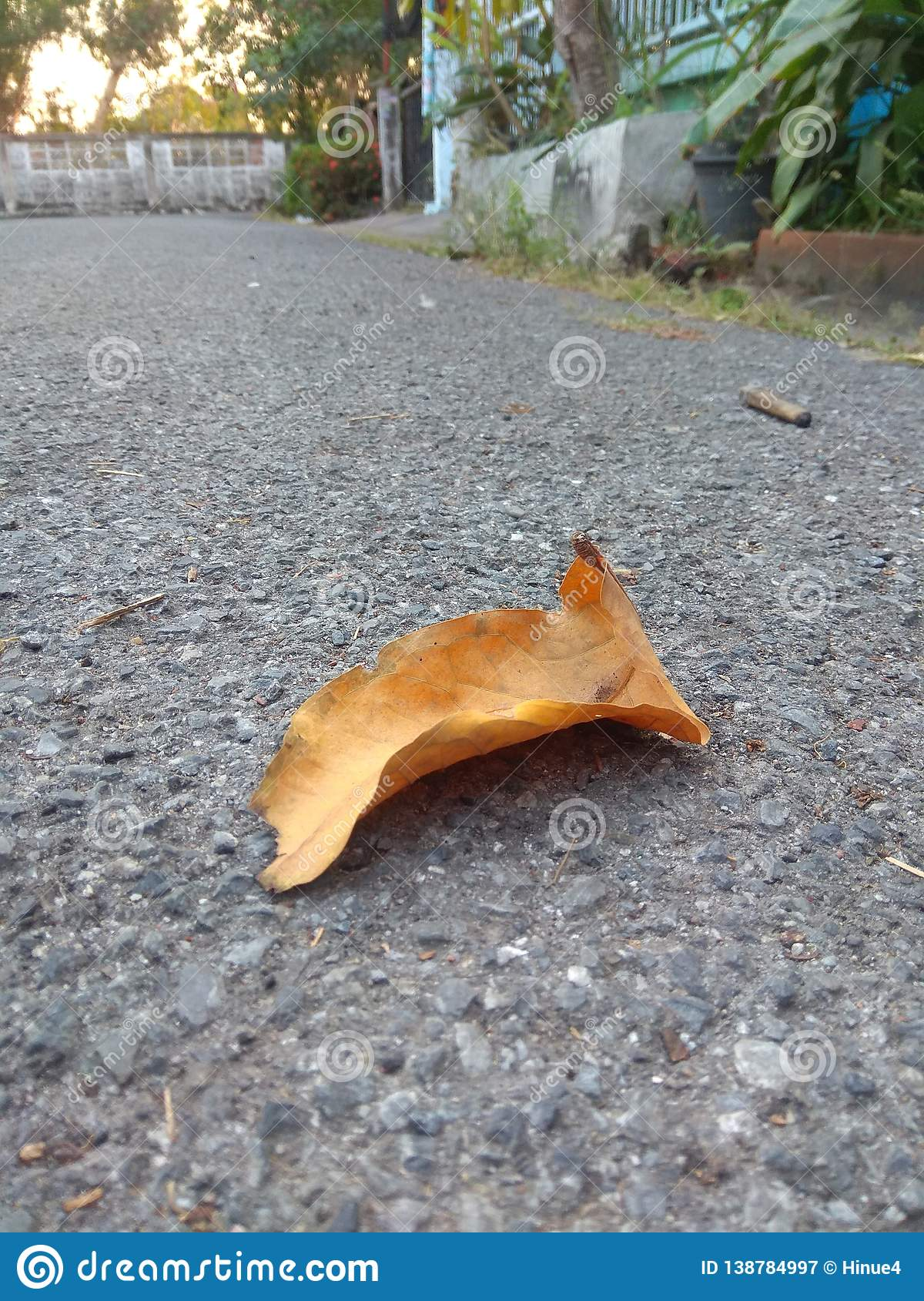 A dry leaf fallen on the floor concrete road background