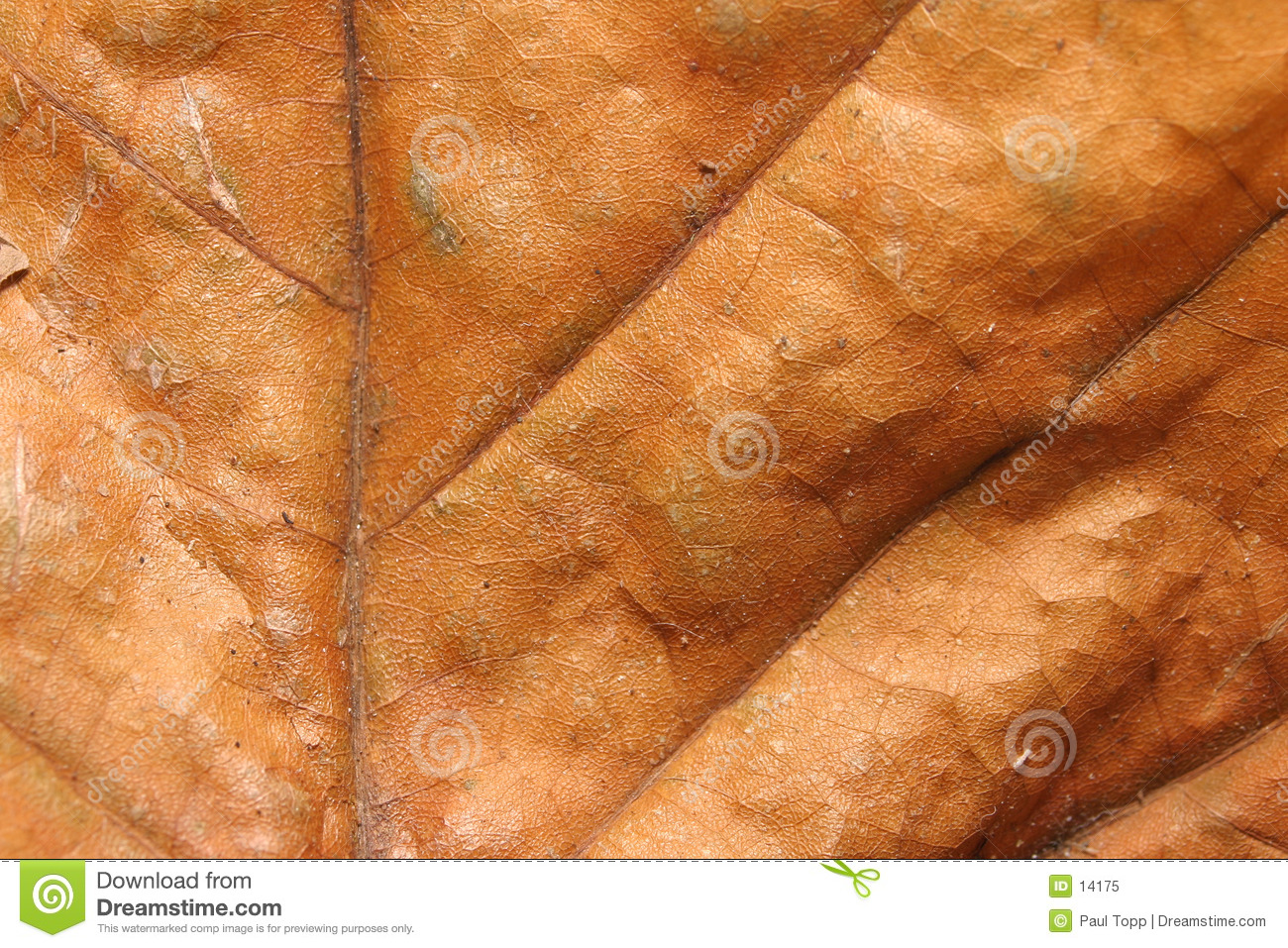 Dry Leaf Texture for Backgrounds
