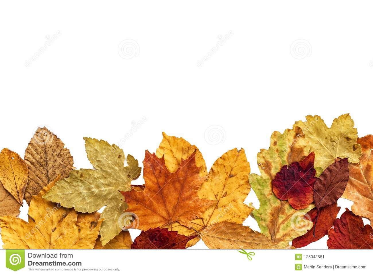 Dry Leaves Of Trees On A White Background  Autumn  Place For