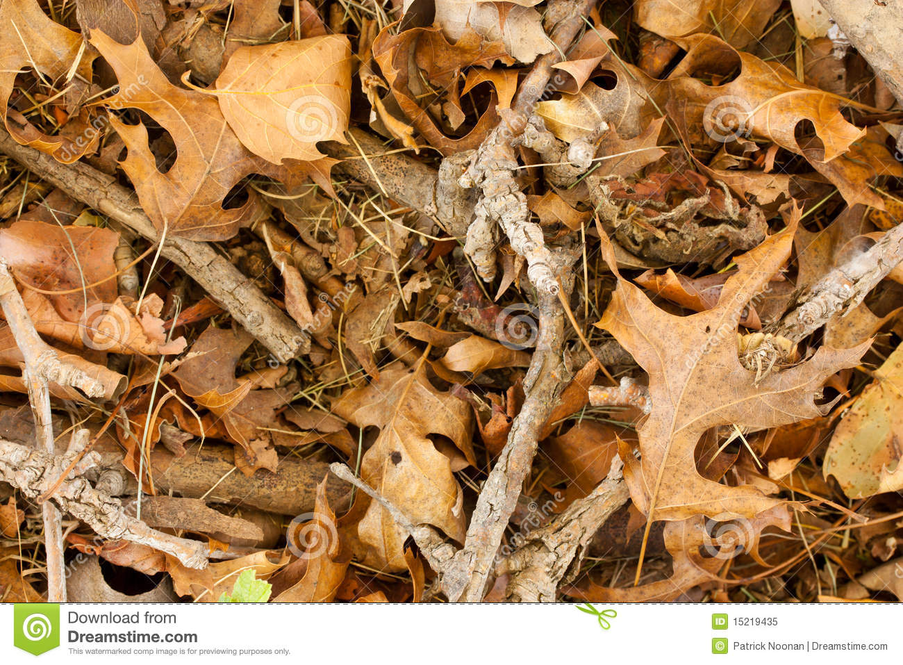 Dry Leaves And Twigs Royalty Free Stock Photo - Image: 15219435