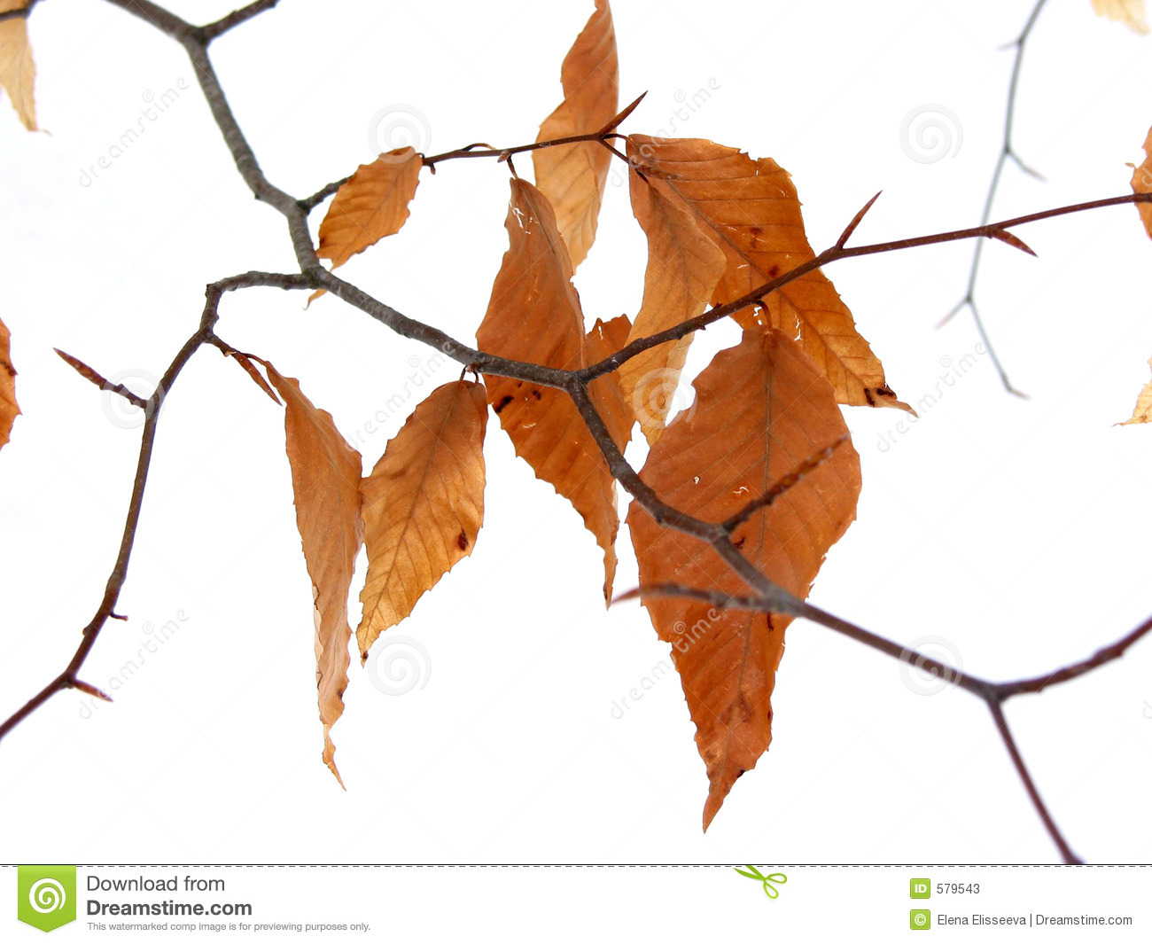 Dry leaves winter stock image. Image of leaf, detail ...