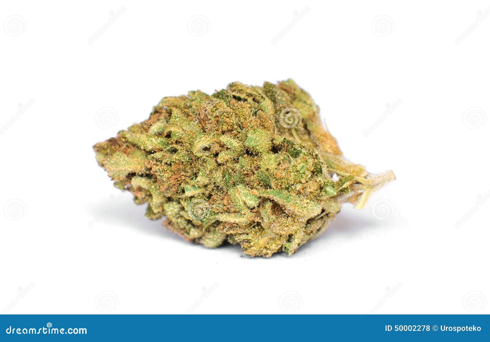 dry marijuana bud on white background stock photo image marijuana leaf clip art free marijuana leaf clip art png