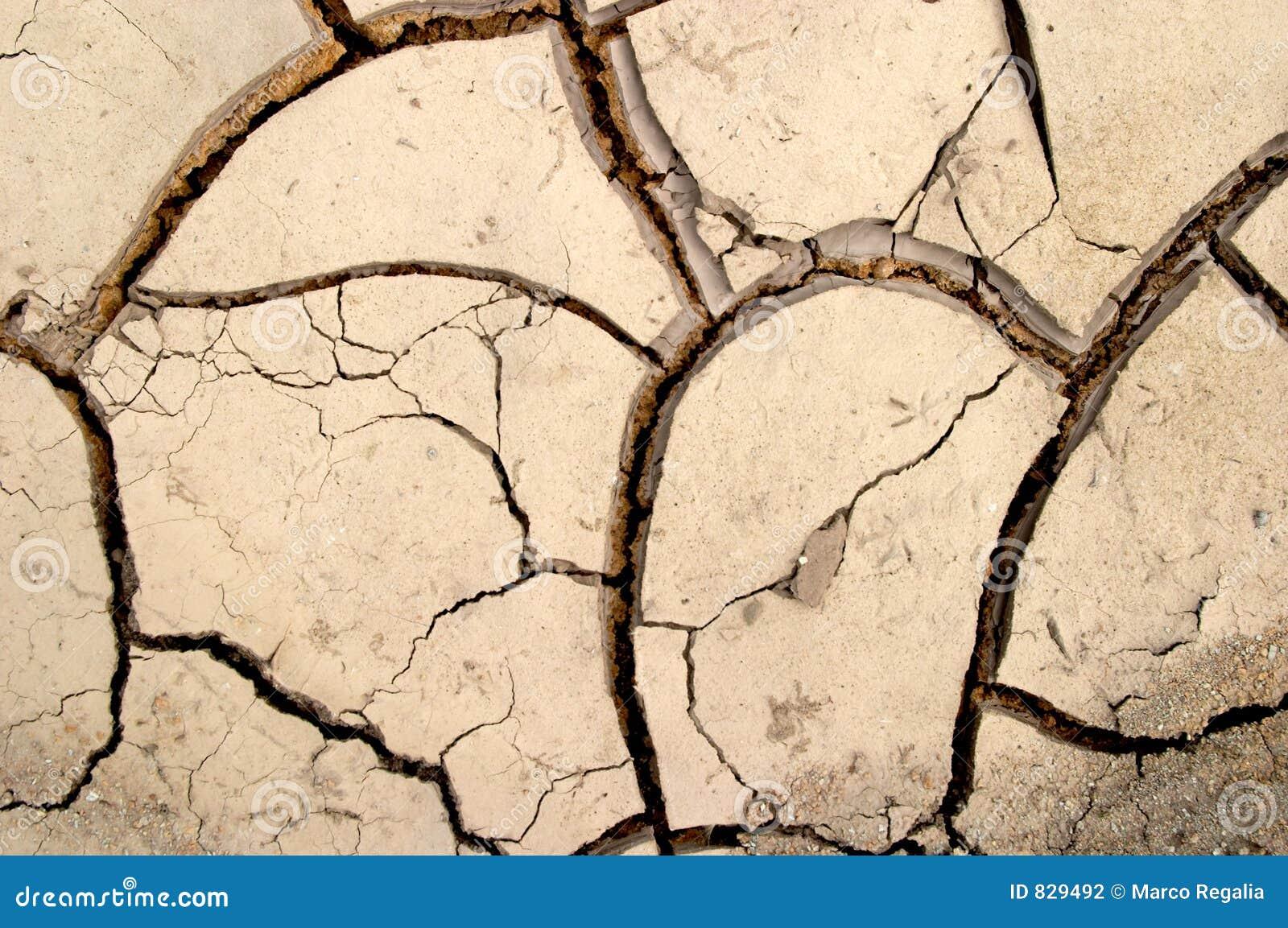 Dry mud cracks texture