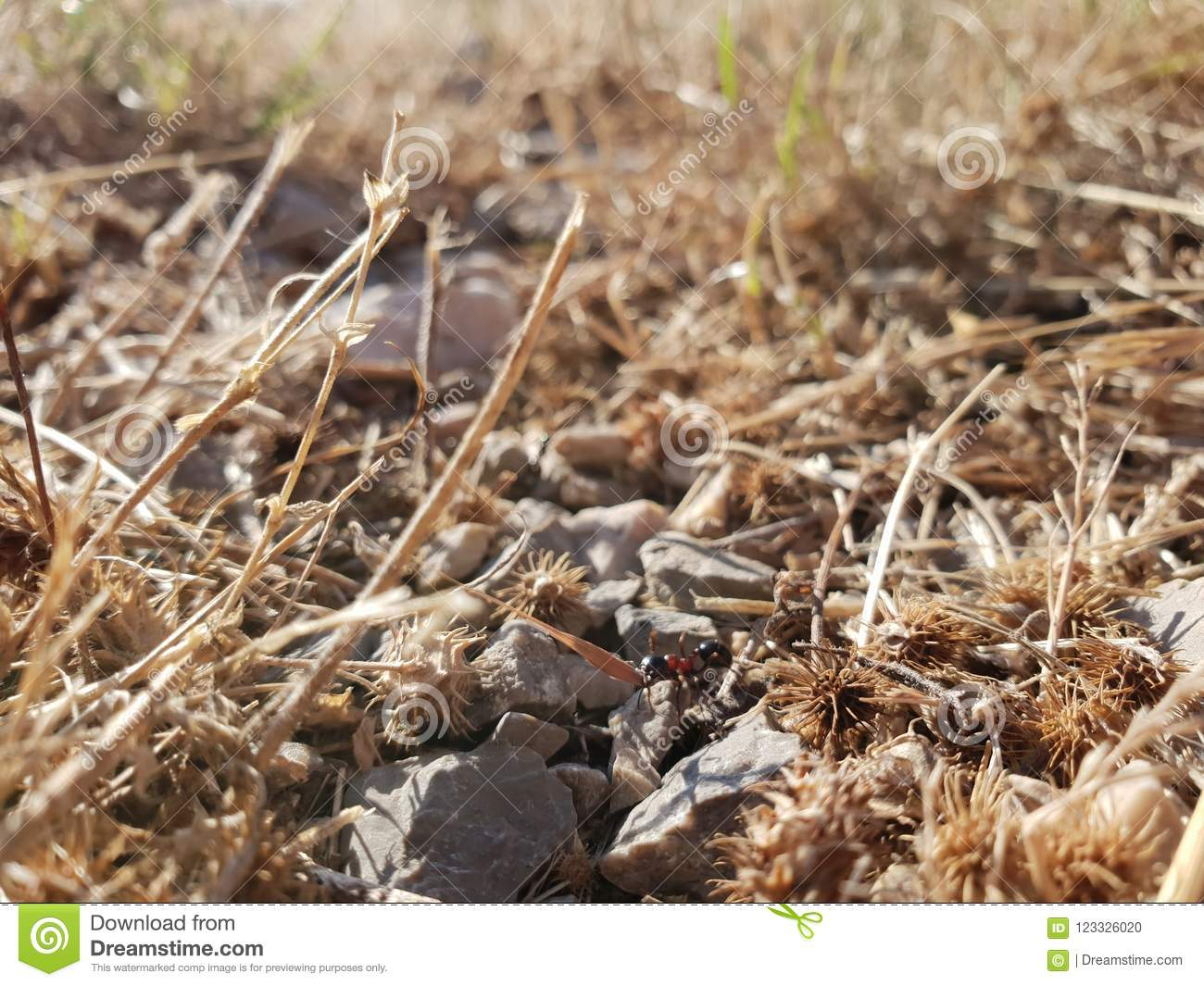 Dry rocky ground with ant