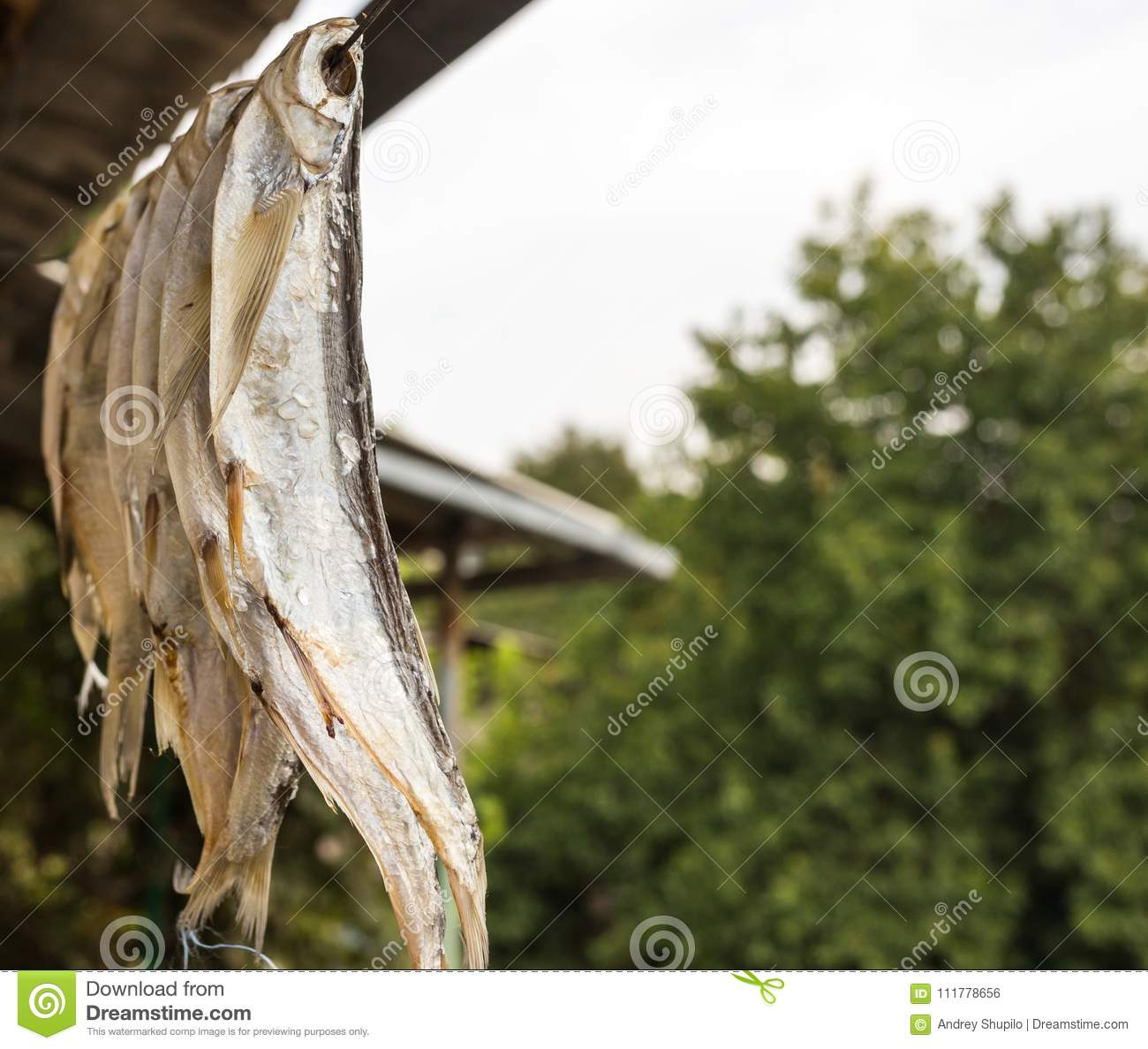 Dry salted fish outdoors