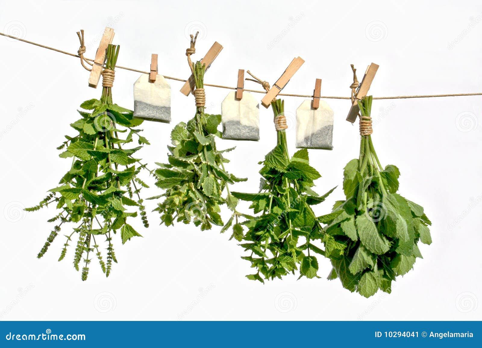Drying Herbs Stock I