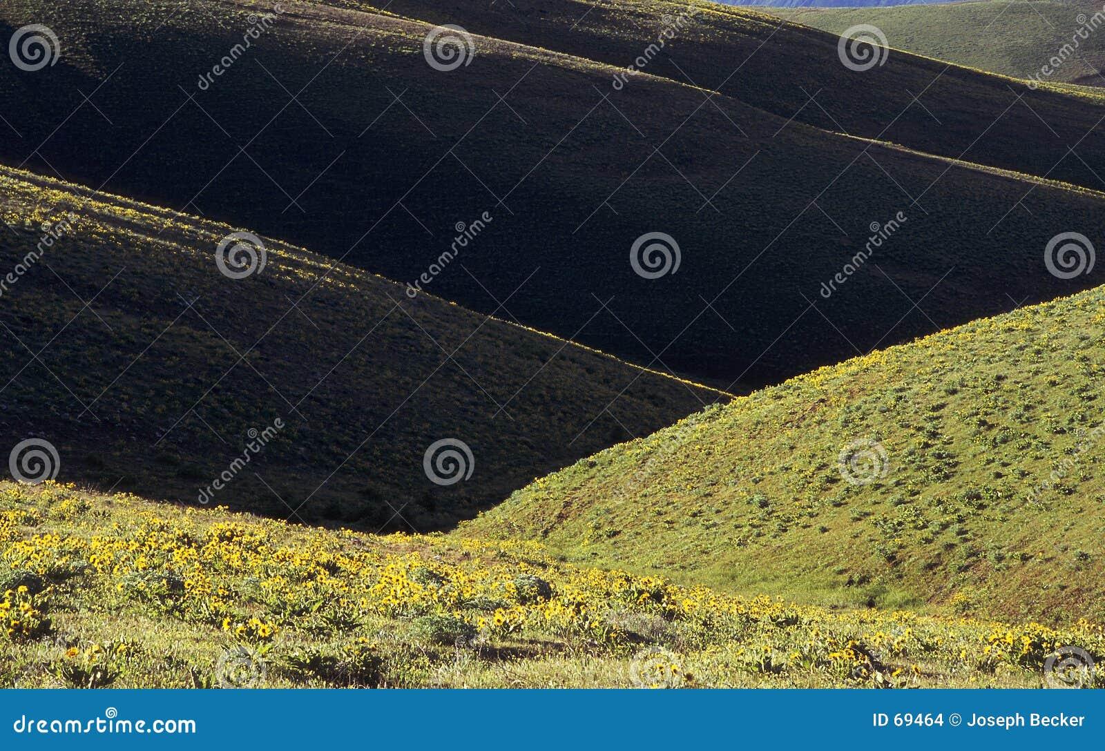 Dryland Heuvels in de Lente