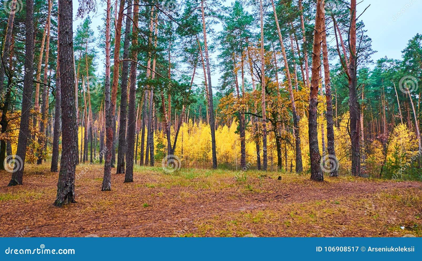 Drzewa barwiący z zieleni i koloru żółtego kolorami