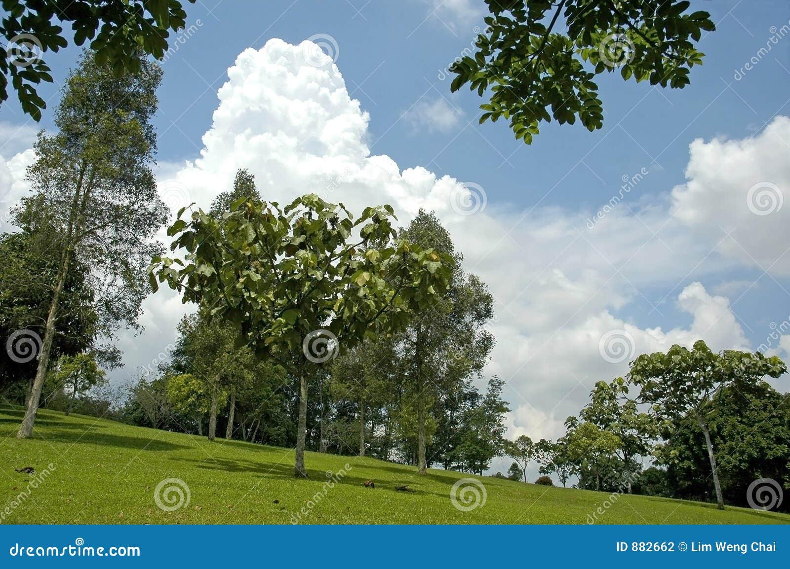 Drzewa krajobrazowi
