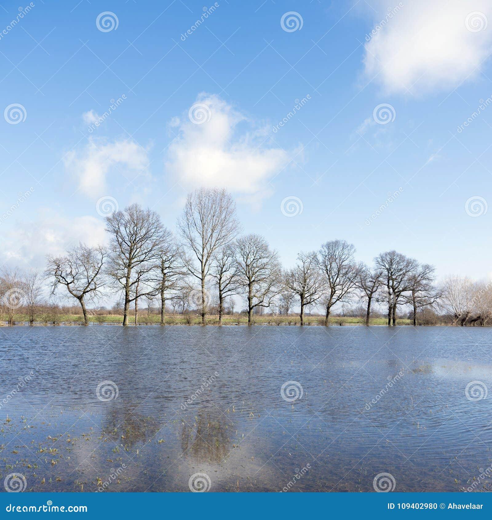 Drzewa na terenach zalewowy rzeczny ijssel blisko Zalk między Kampen i Zwolle w holandiach