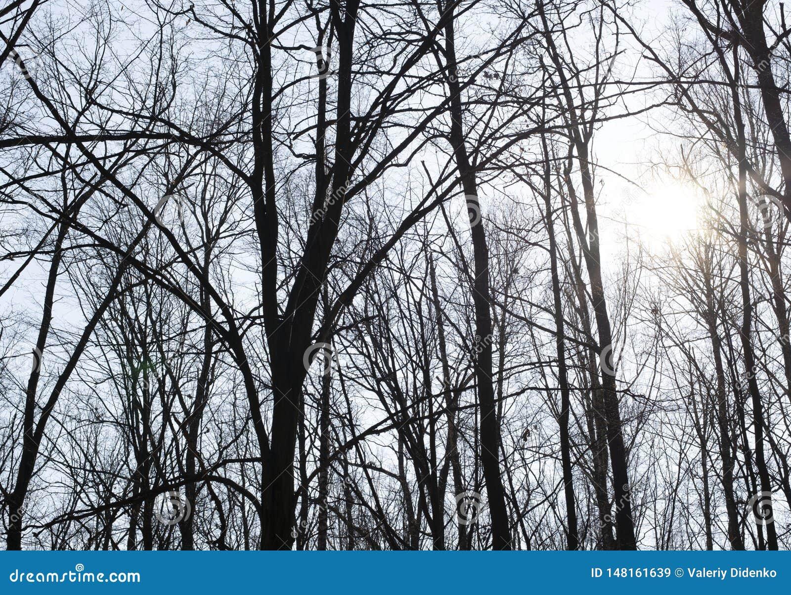 Drzewa na tle niebo