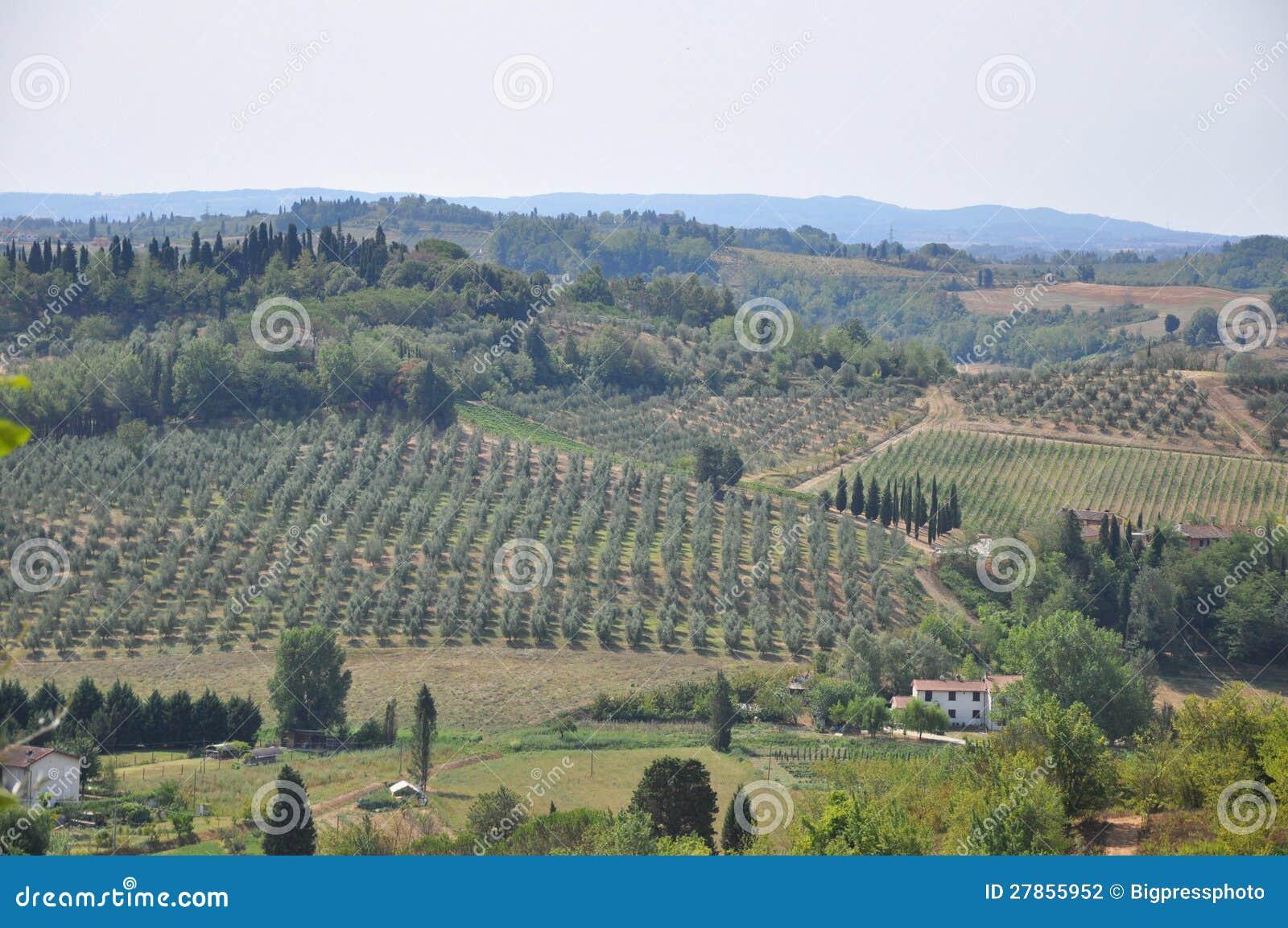 Drzewa oliwne i wzgórza Florencja Tuscany