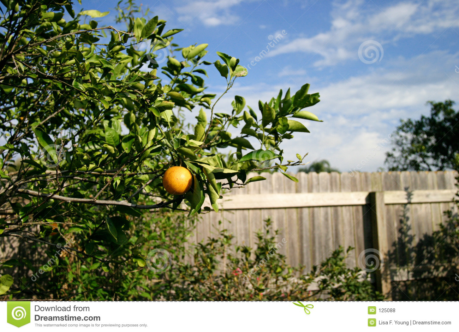 Drzewa pomarańczowe