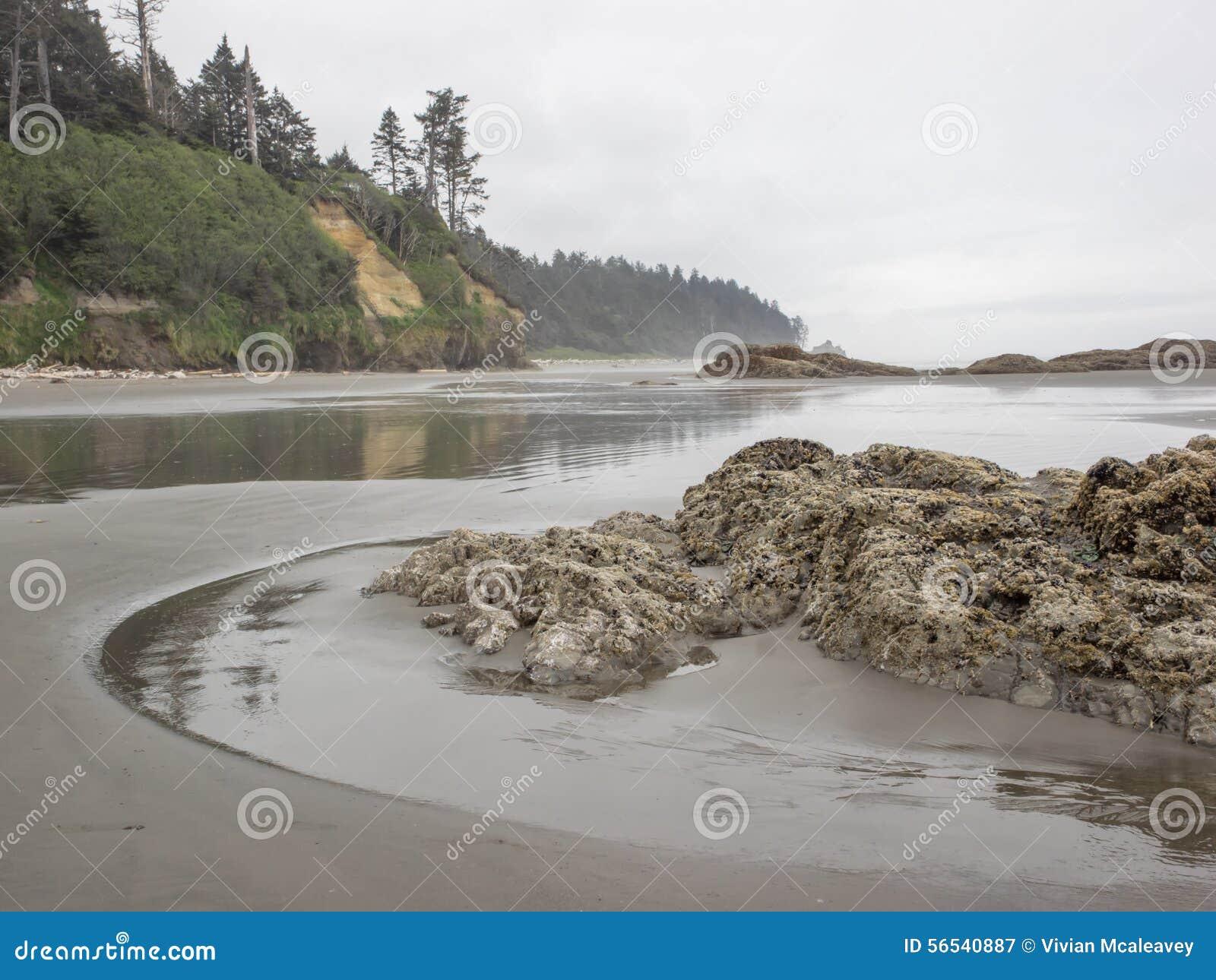Drzewa r na dennych stertach przy piaskowatą plażą
