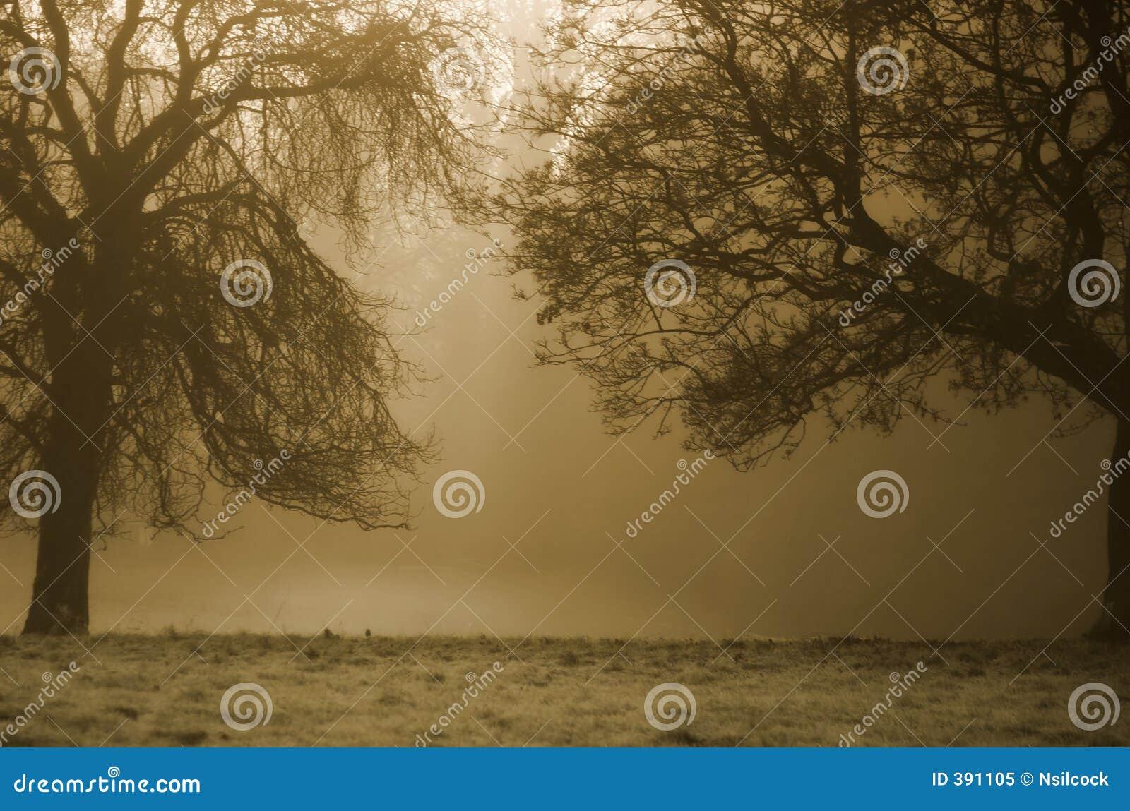 Drzewa tło