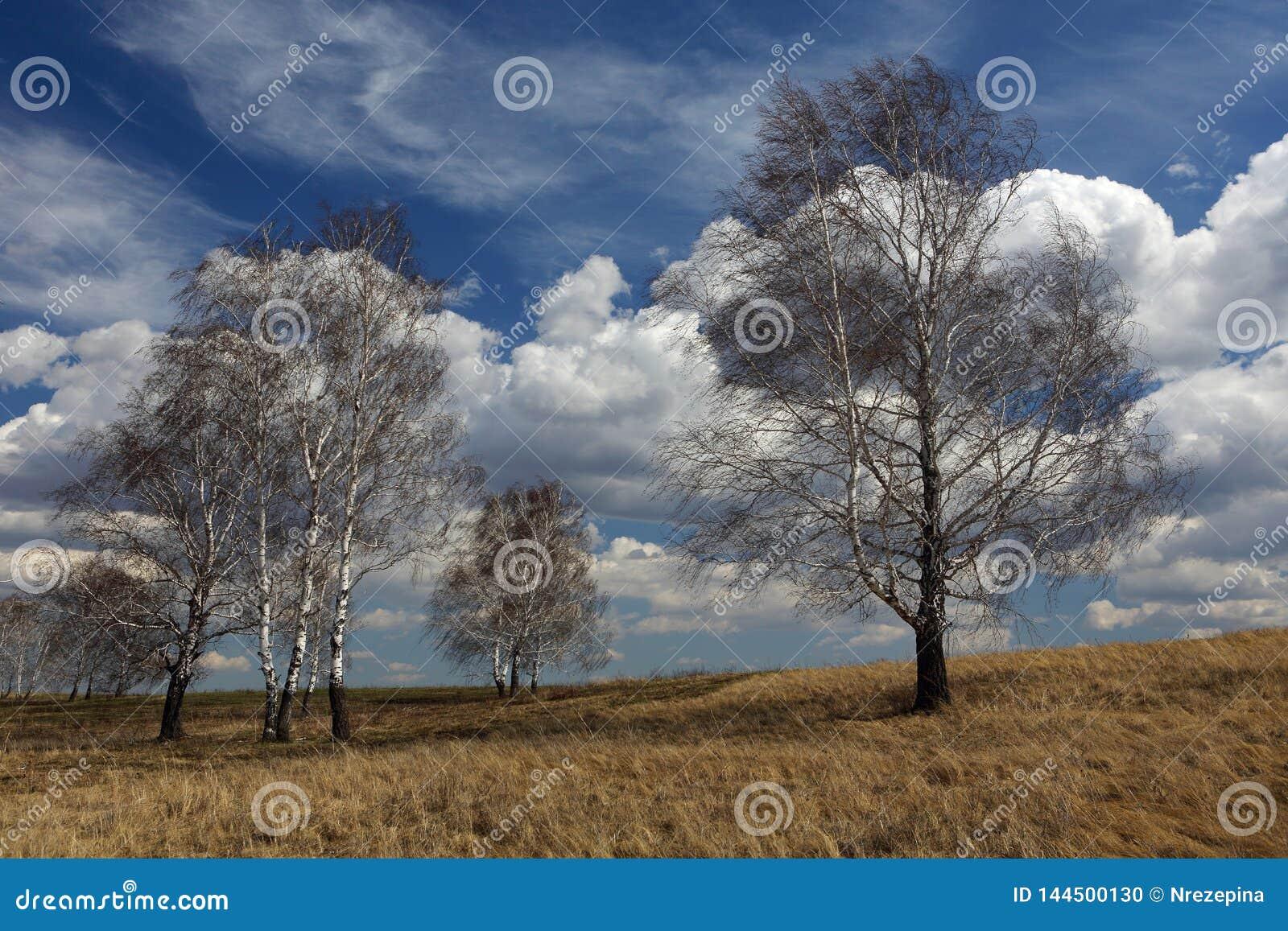 Drzewa w łące przeciw wiosny niebu