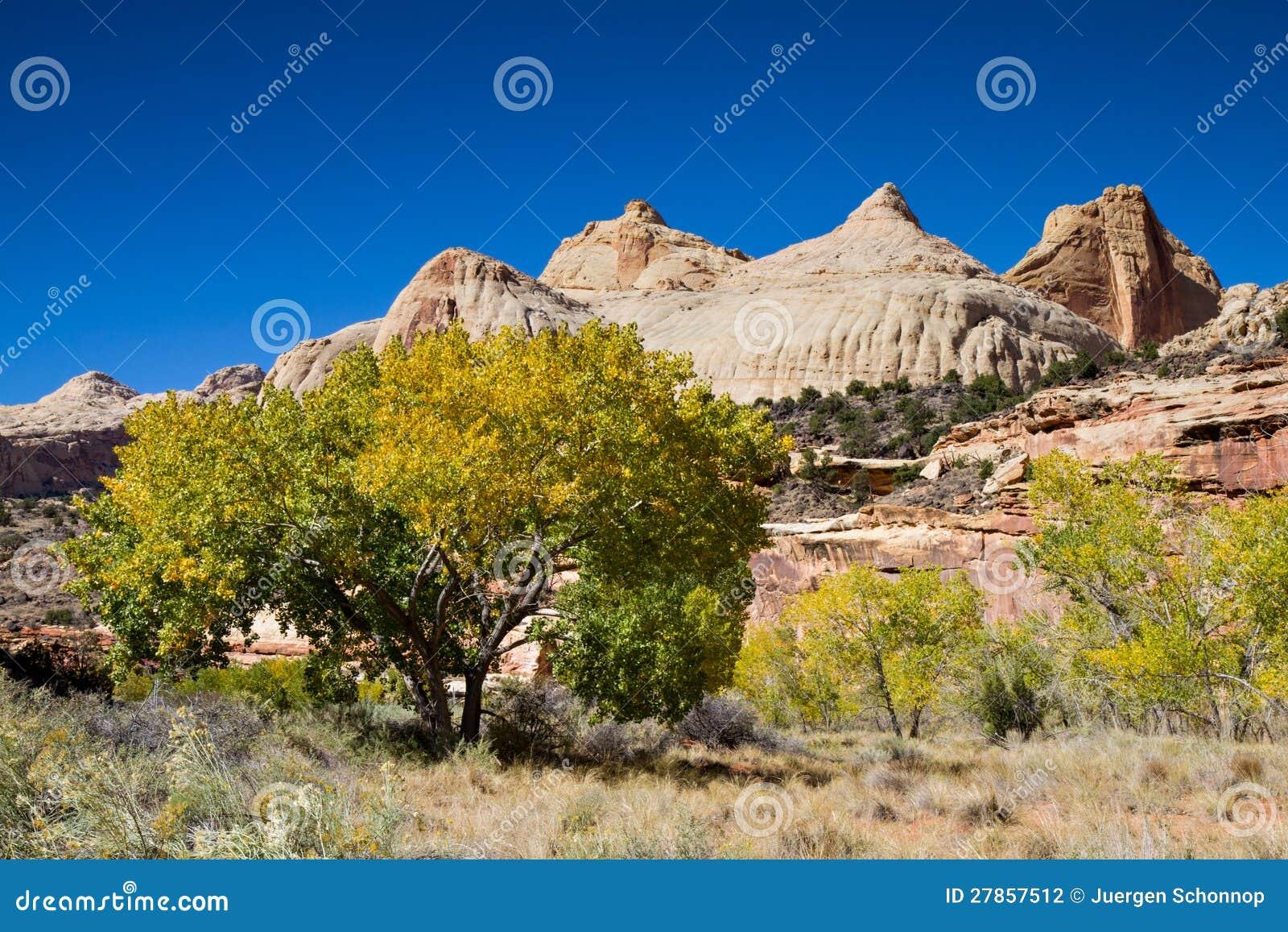 Drzewa w Capitol rafy park narodowy
