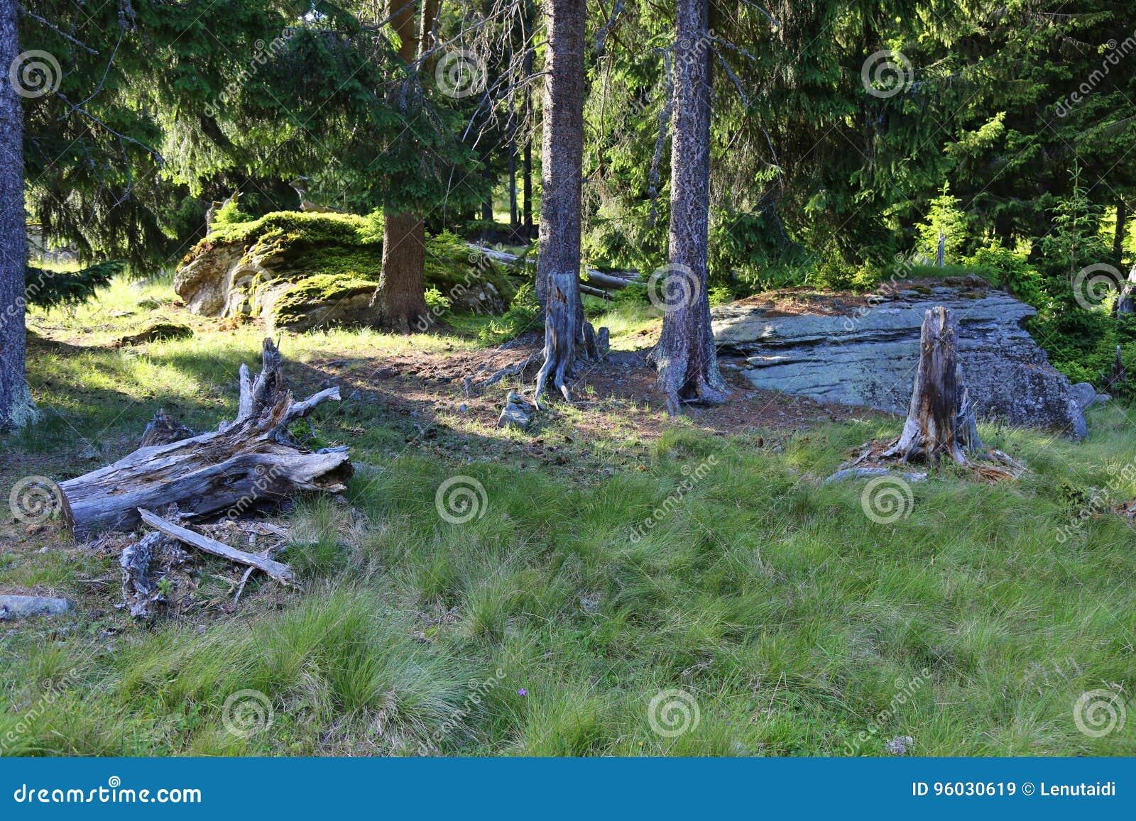 Drzewa w lesie w dekompozyci