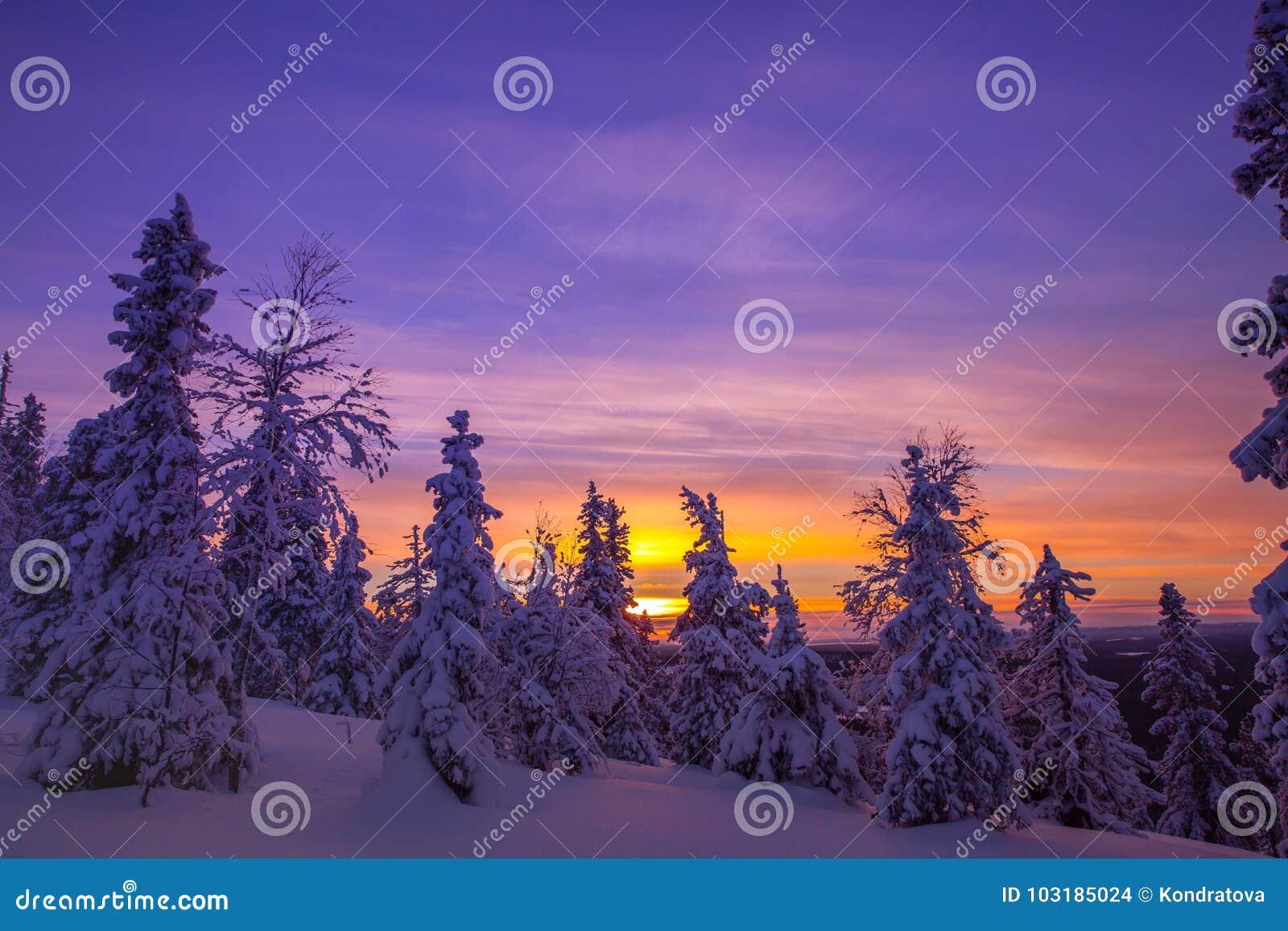 Drzewa zakrywający z hoarfrost i śniegiem w zim górach