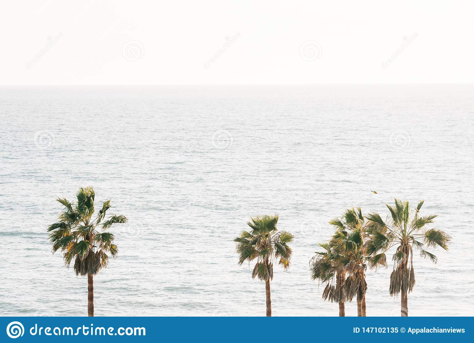 Drzewka palmowe i ocean spokojny w San Clemente, orange county, Kalifornia