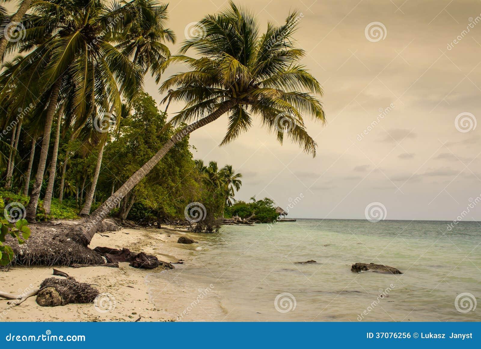 Download Drzewka Palmowe Na Tropikalnej Plaży W Colombia, Ameryka Sura Zdjęcie Stock - Obraz złożonej z morze, ocean: 37076256