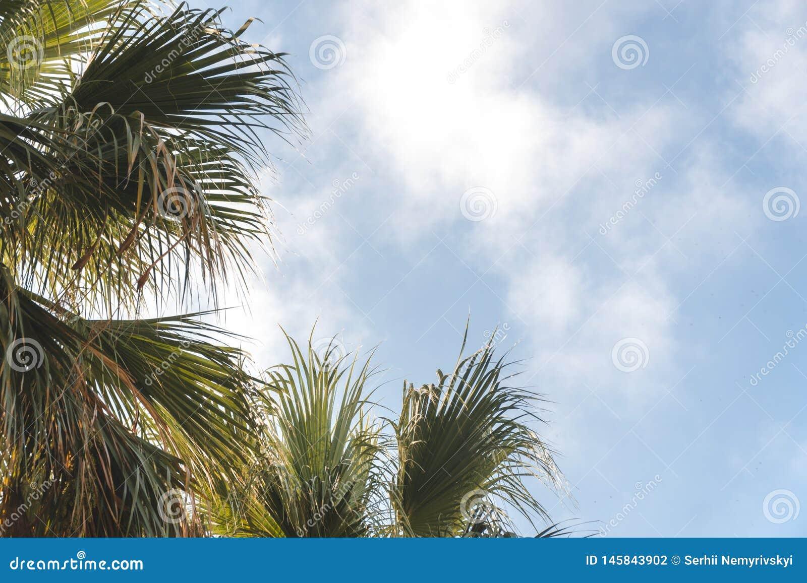 Drzewka palmowe w tropikalnym kurorcie przy pi?knym s?onecznym dniem Wizerunek tropikalny wakacje i pogodny szcz??cie skud?acenia