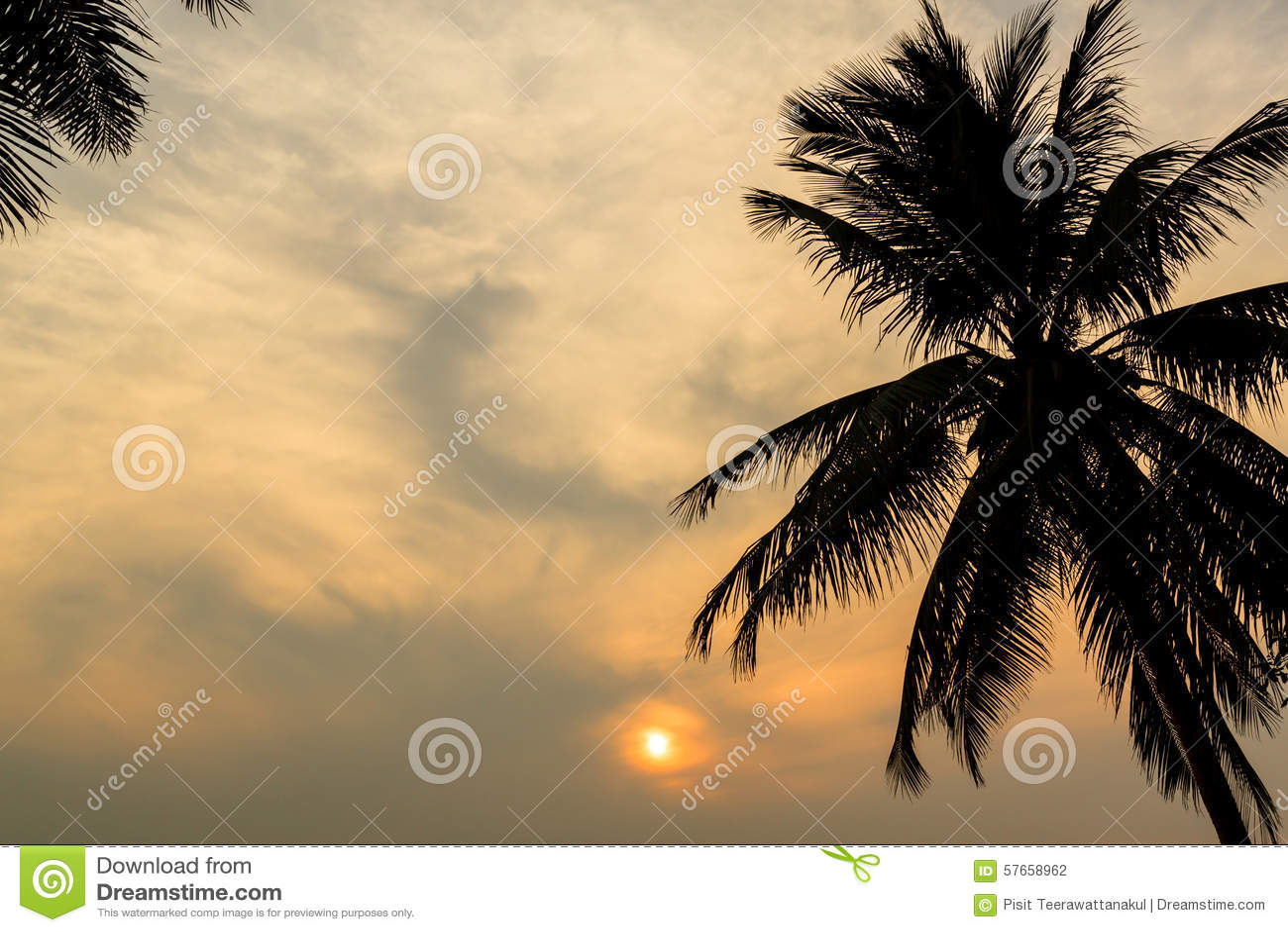 Drzewko Palmowe i zmierzch przy mrocznym czasem, sylwetka