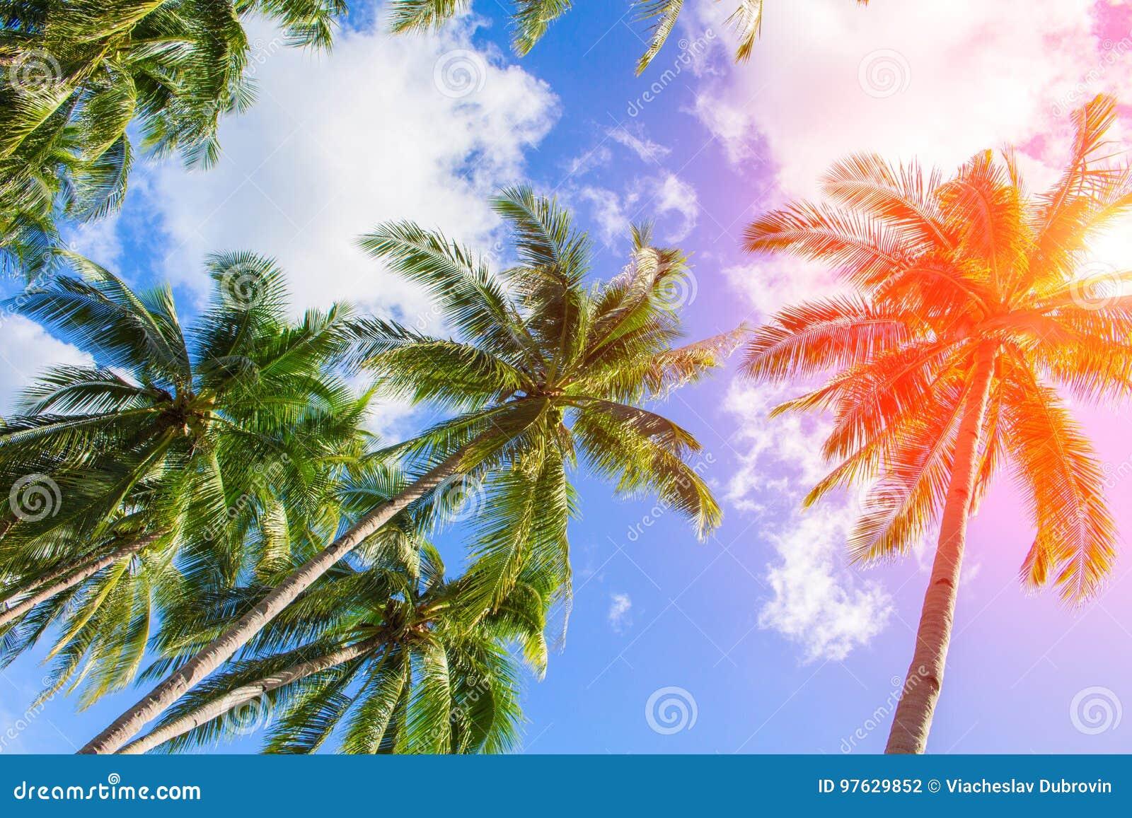 Drzewko palmowe korona na chmurnym niebie Pogodnej tropikalnej wyspy stonowana fotografia Światło słoneczne na palmowym liściu