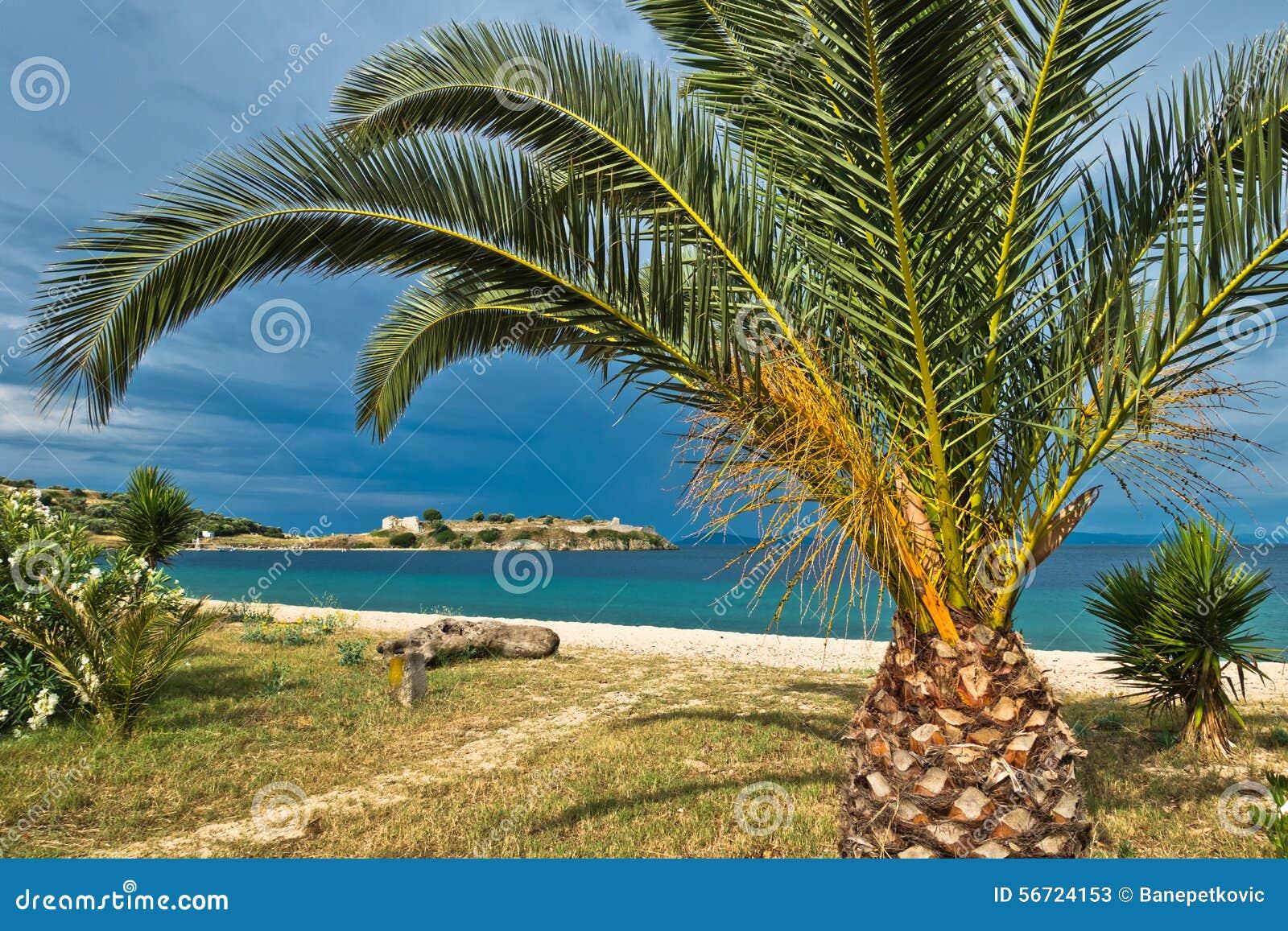 Drzewko palmowe na piaskowatej plaży, stary rzymski forteca w tle