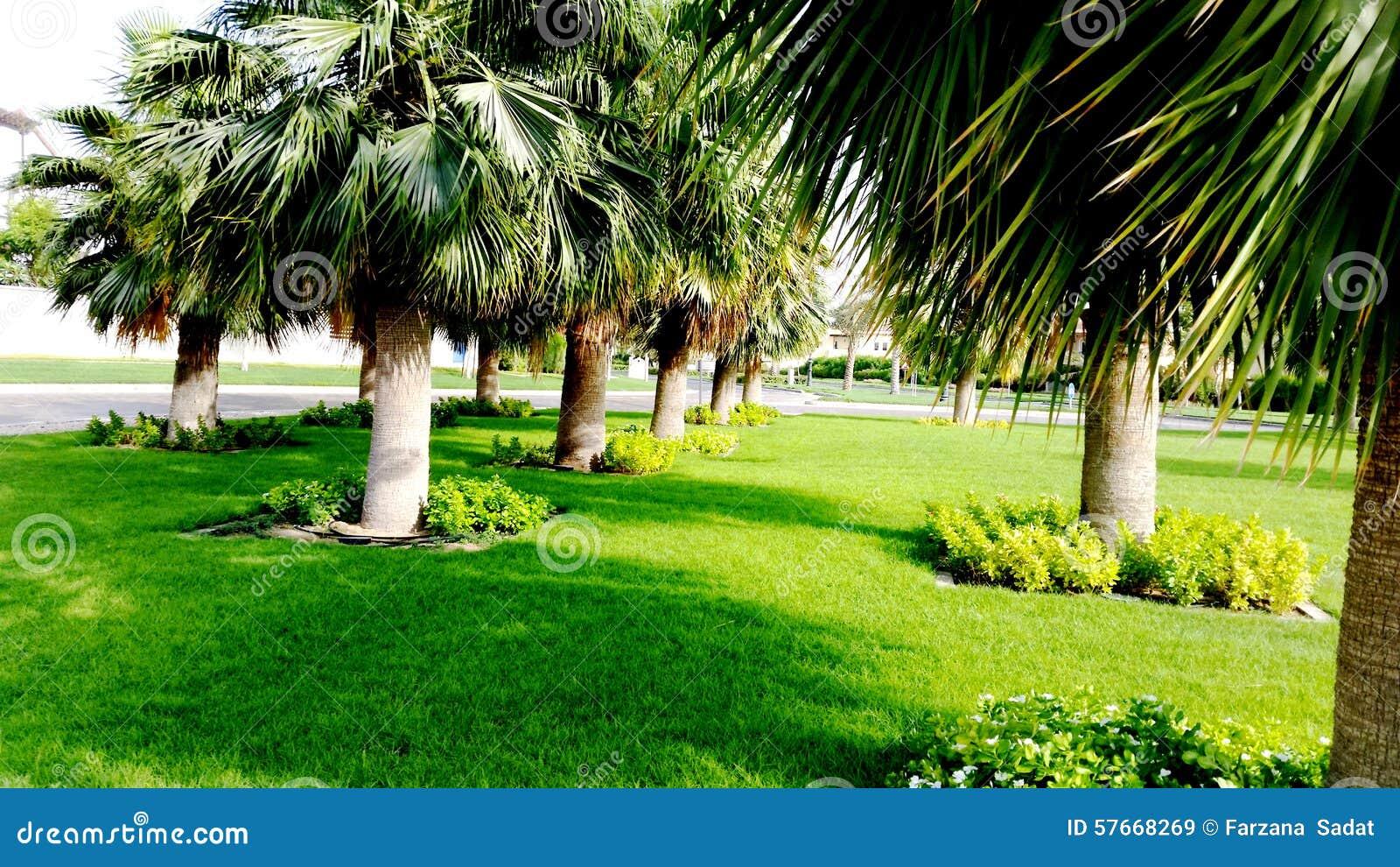 Drzewko Palmowe na Round