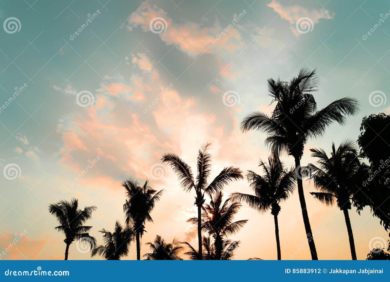 Drzewko palmowe na tropikalnej plaży z zmierzchem w lecie