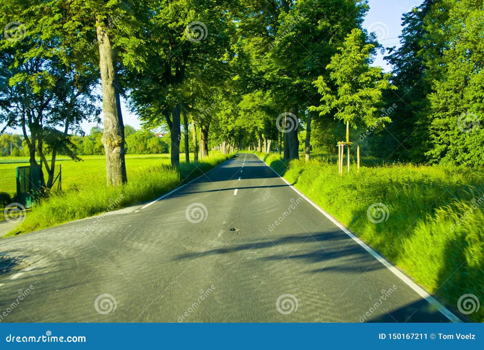 Drzewna aleja wiejska droga w Hesse, Niemcy