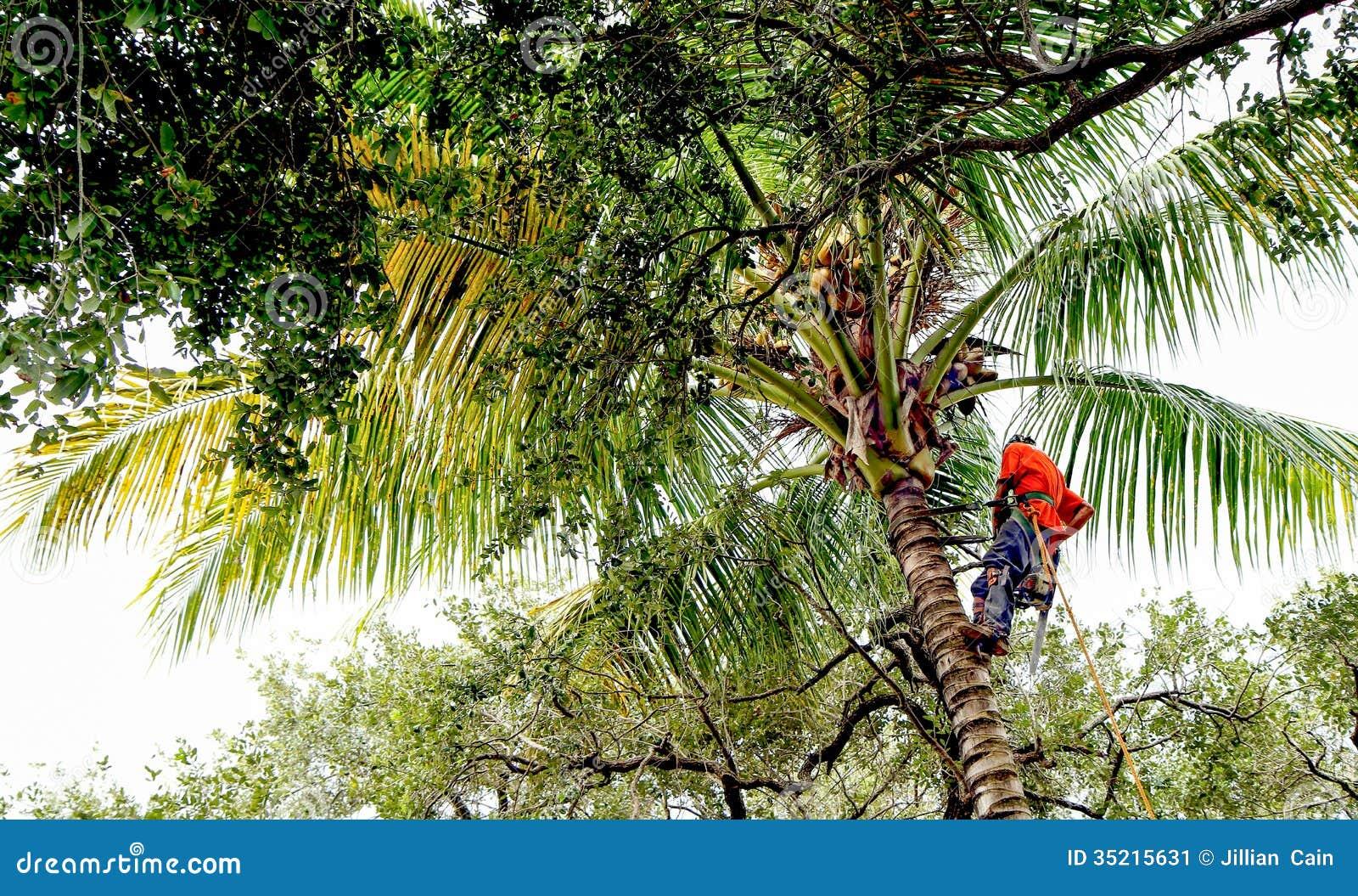 Drzewna drobiażdżarka na drzewku palmowym