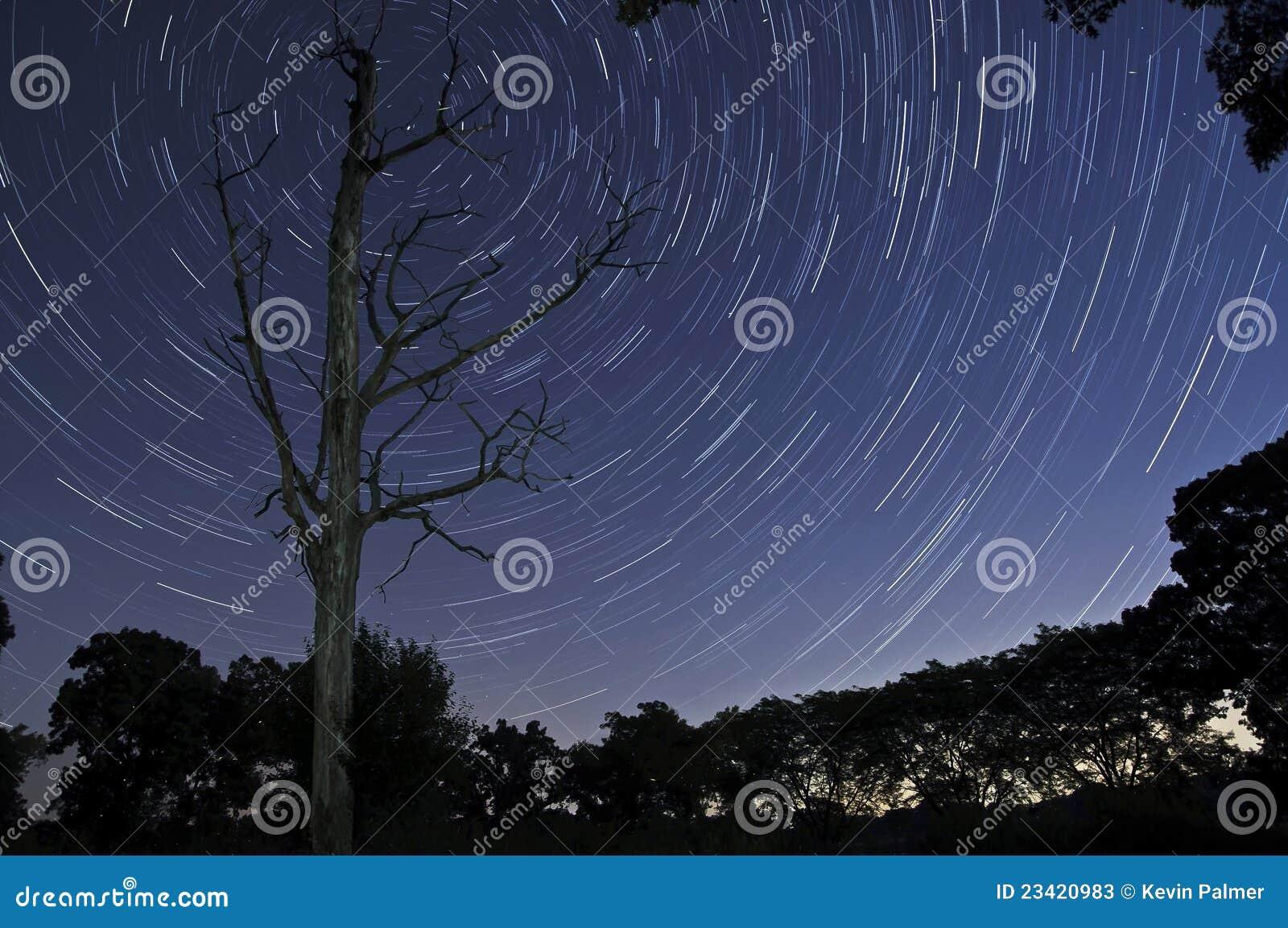 Drzewne nieżywe gwiazdy