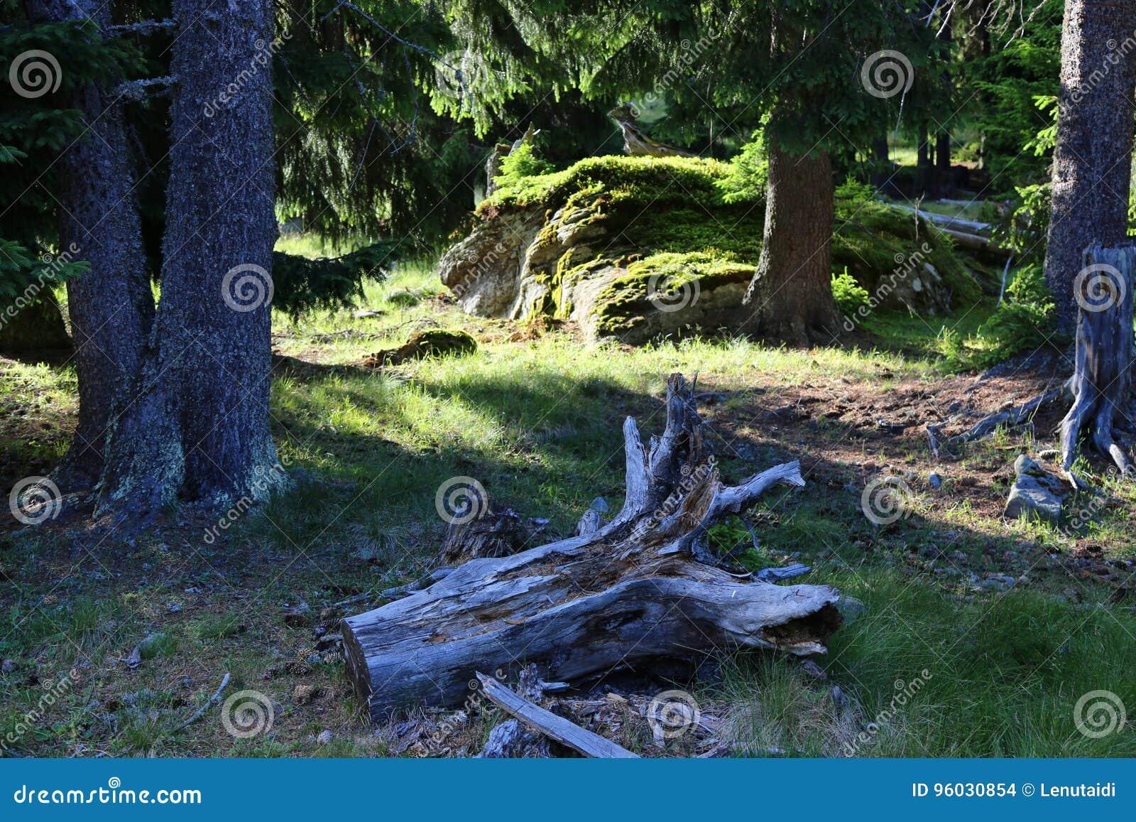 Drzewnego bagażnika gruzy