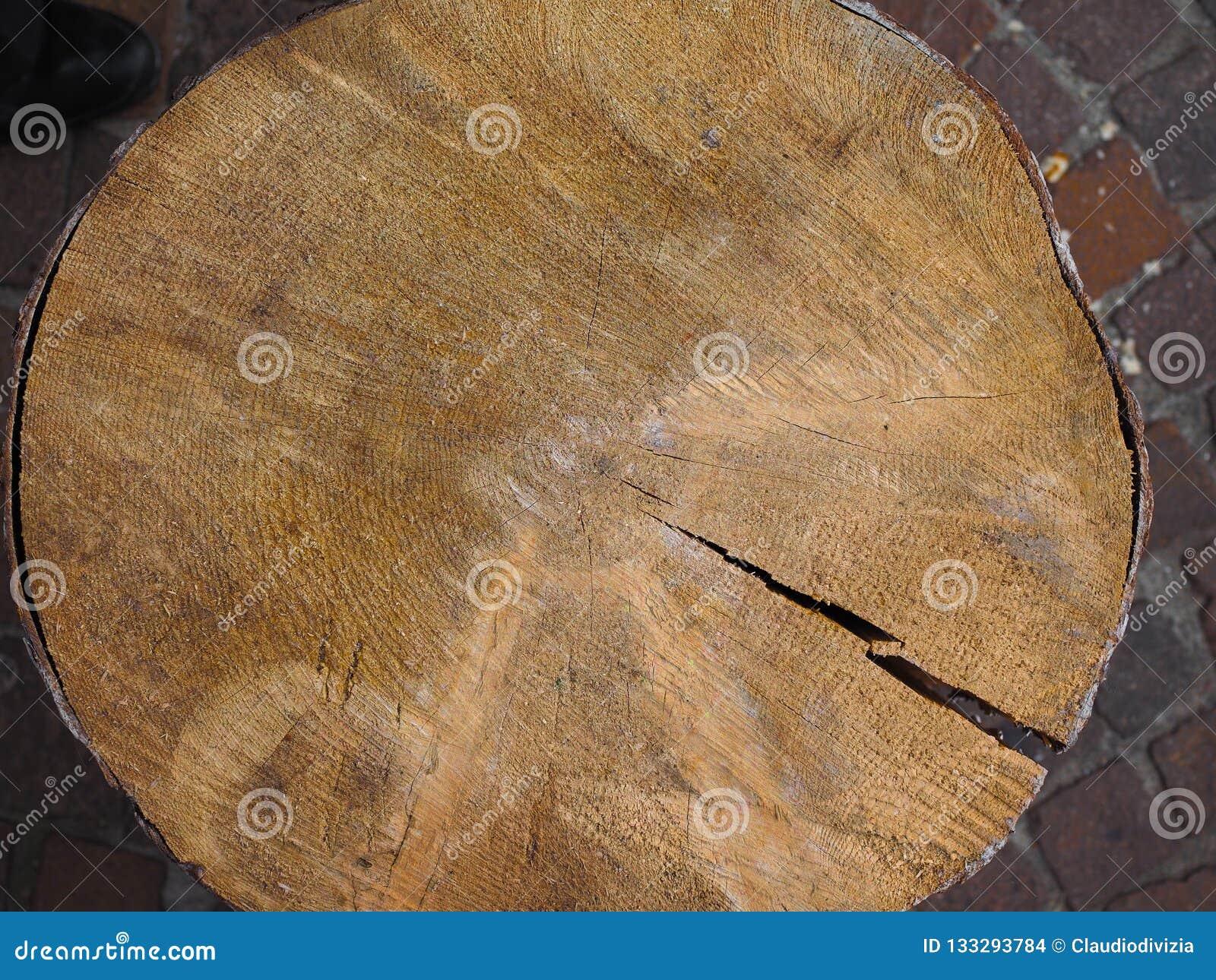 Drzewnego bagażnika sekcja