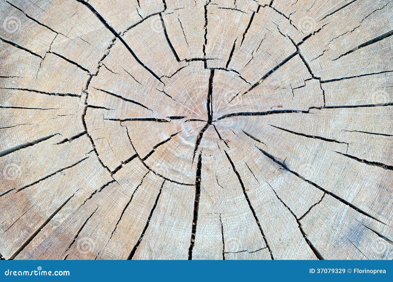Download Drzewnego Bagażnika Tekstura Obraz Stock - Obraz złożonej z naturalny, szczegółowy: 37079329