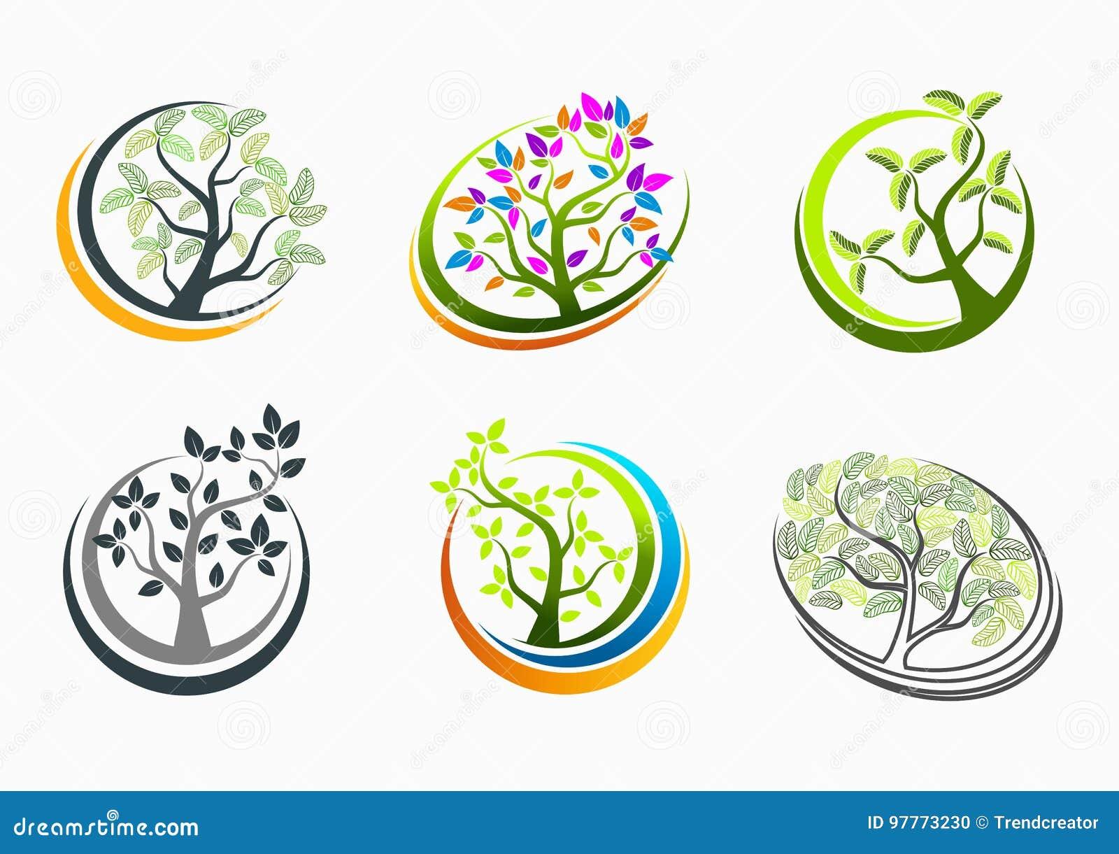 Drzewni zdrowie, logo, natura, zdrój, znak, masaż, ikona, roślina, symbol, joga i wzrostowy edukaci pojęcia projekt,