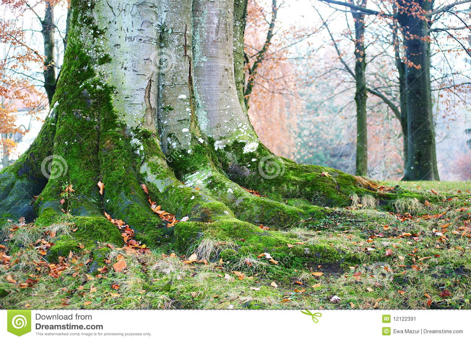 Drzewny bagażnik