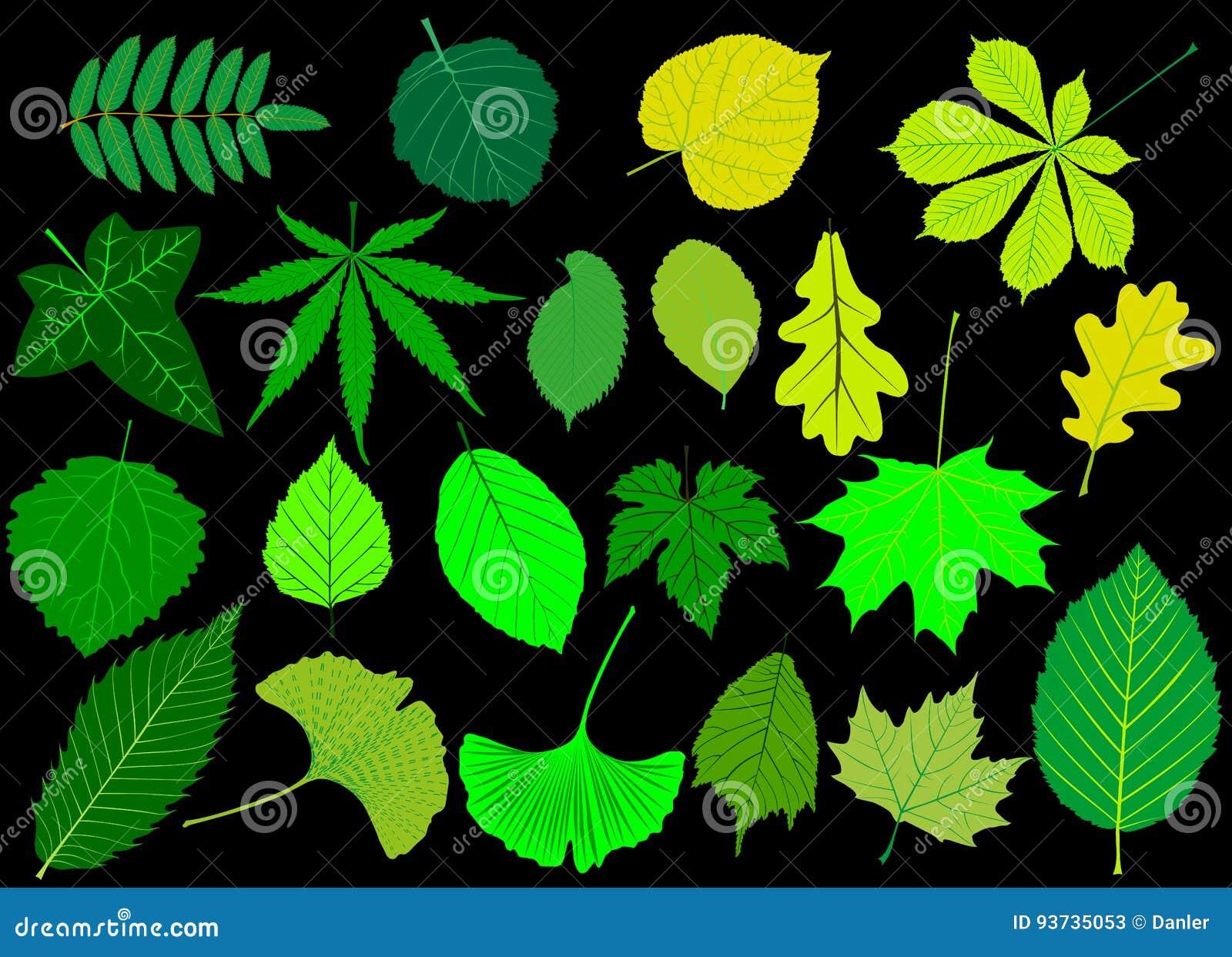 Drzewny liść zieleni set,