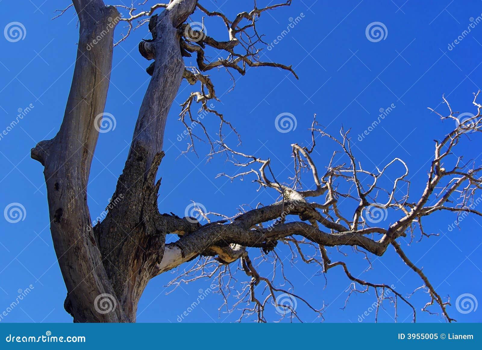 Drzewny nieboszczyk 01