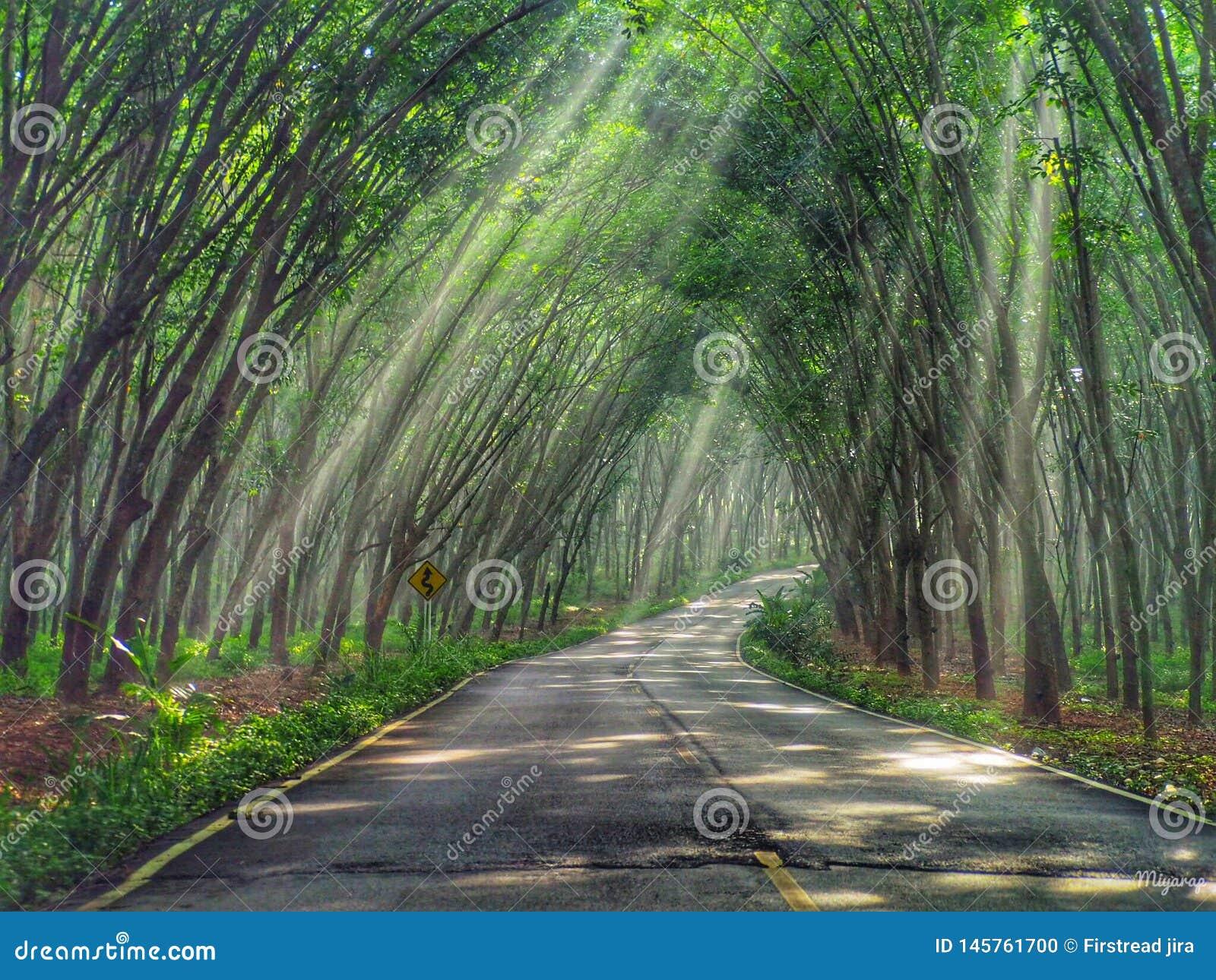 Drzewny tunel