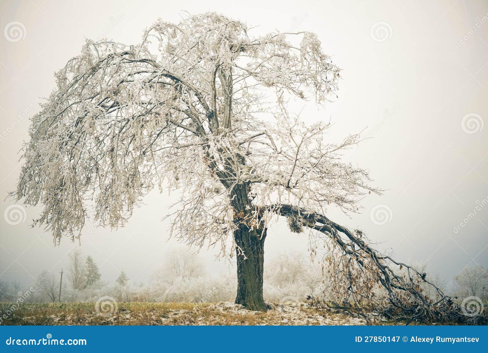 Drzewny witth łamająca gałąź