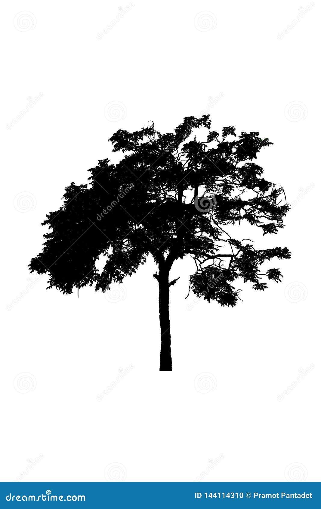 Drzewnych sylwetek piękny odosobniony na białym tle