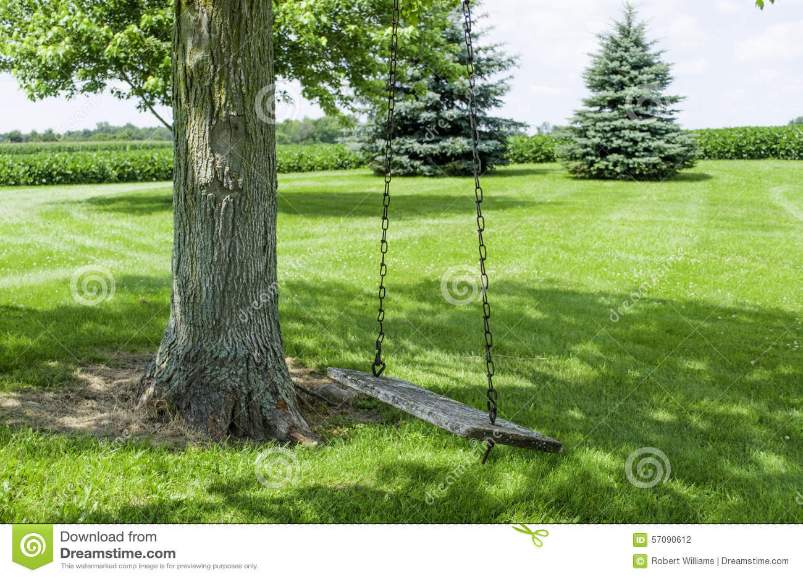 Drzewo huśtawka w cieniu