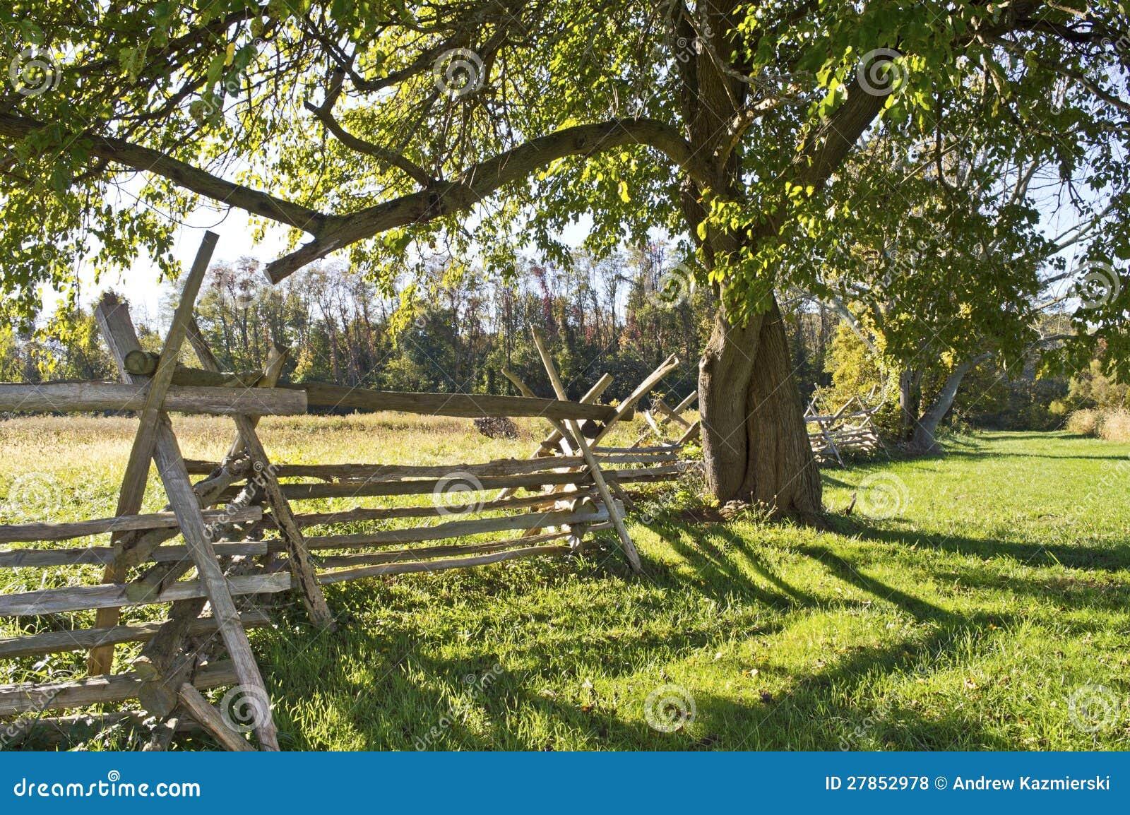Drzewo i Ogrodzenie