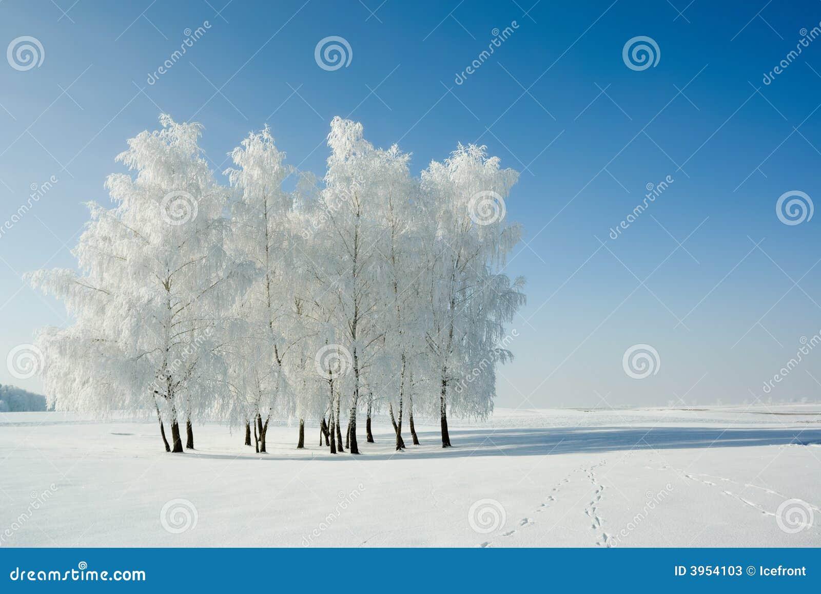 Drzewo krajobrazowa zimy.