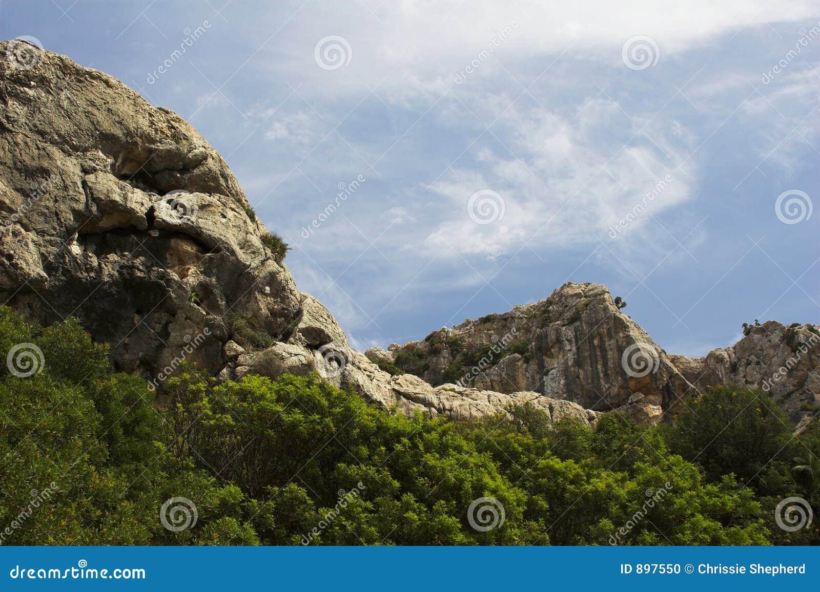 Drzewo niebiańskiej góry