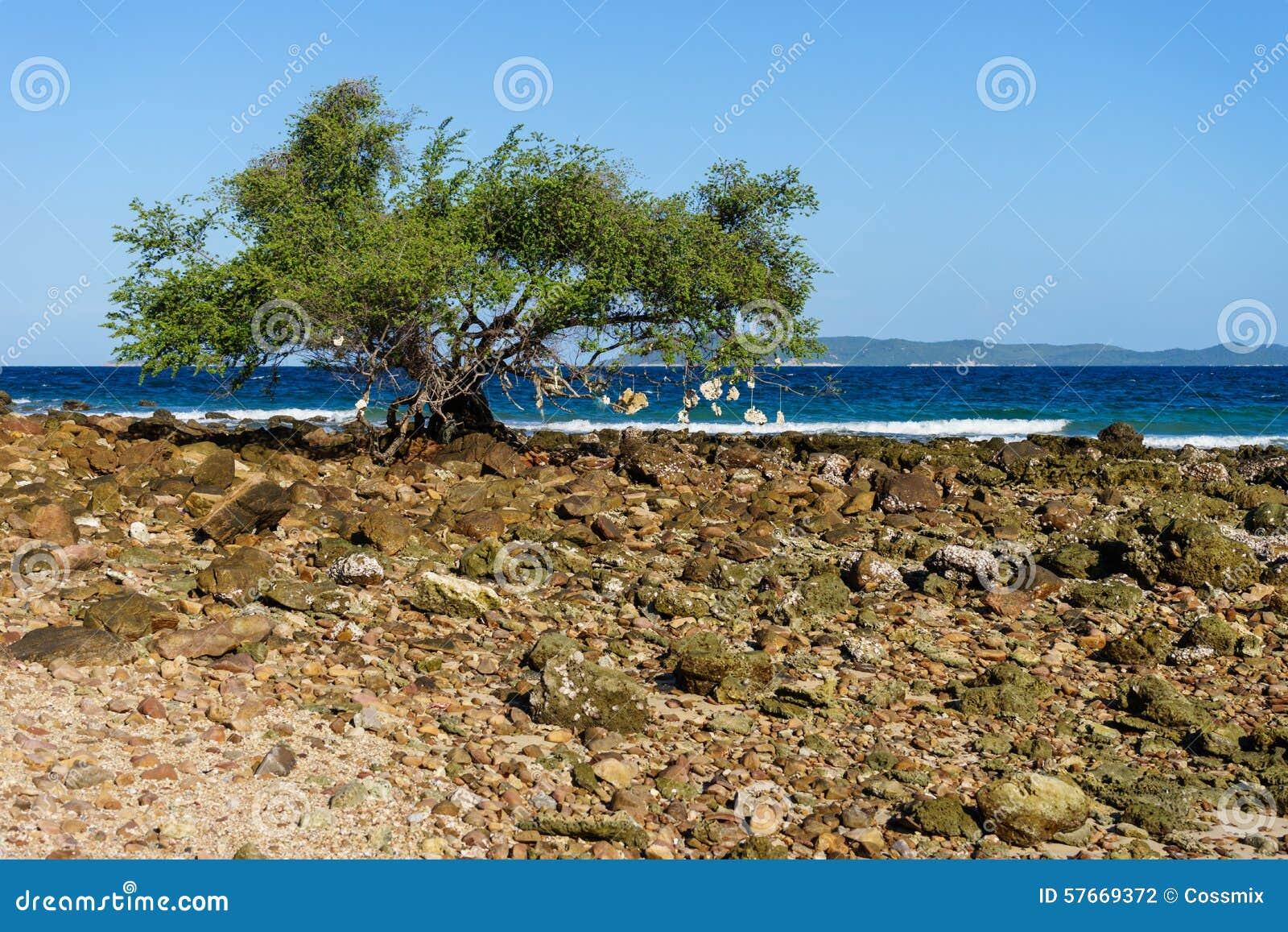 Drzewo obok plaży